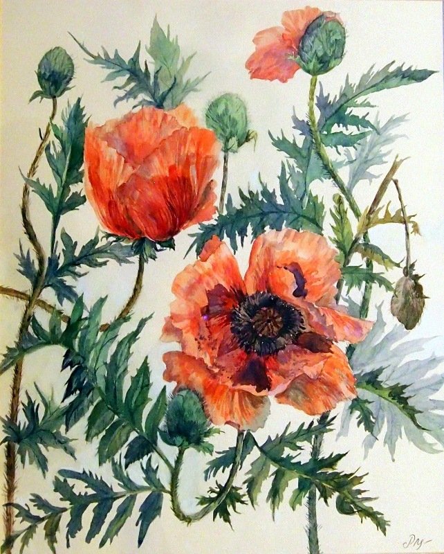 'Garden poppies' watercolour painting by artist Raya Brown-53x61cm