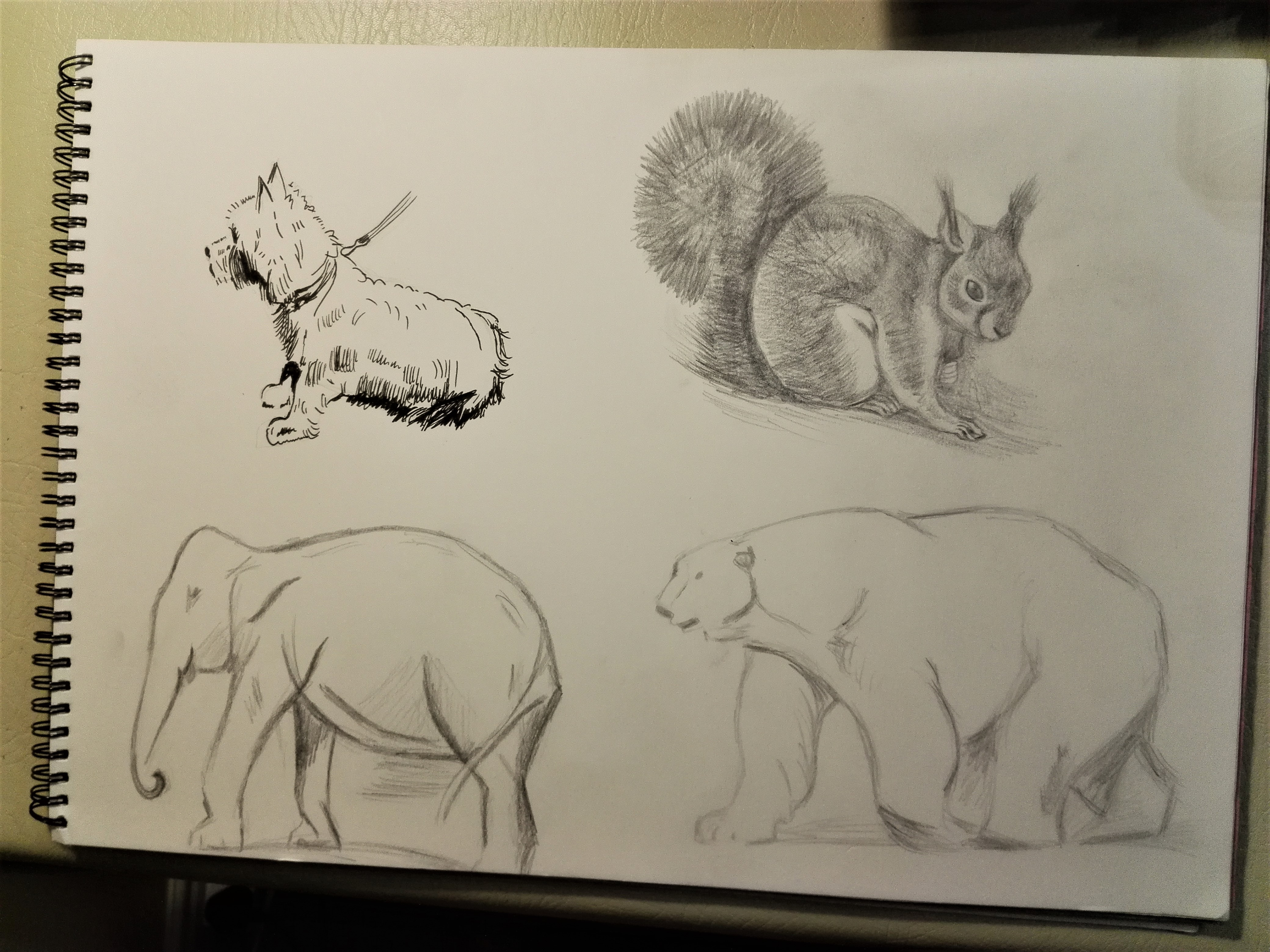 Animal drawings using charcoal, graphite and fine liner created by a student at Fundamental Art Skills course in West Midlands