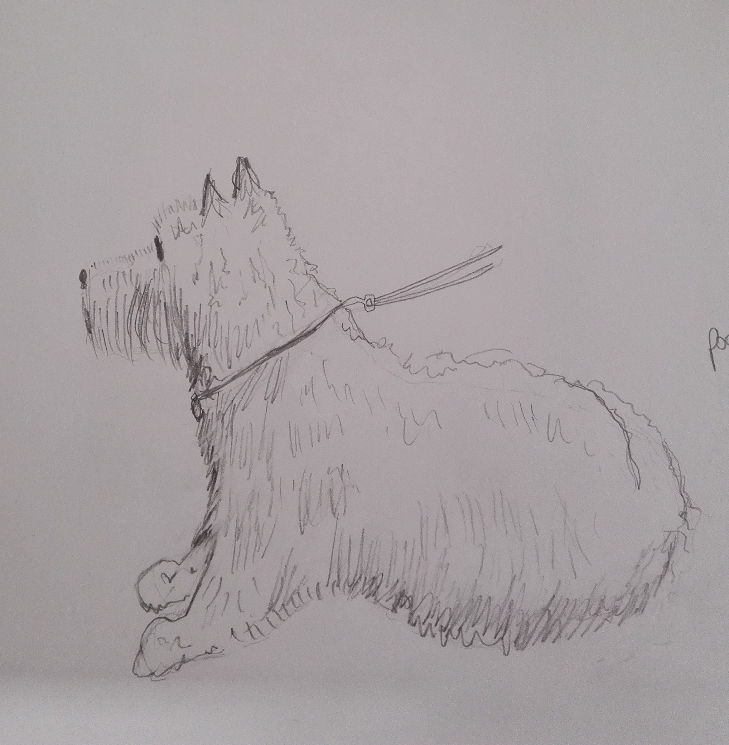 Learn to draw animals with a professional artist Raya Brown fron Worcestershire