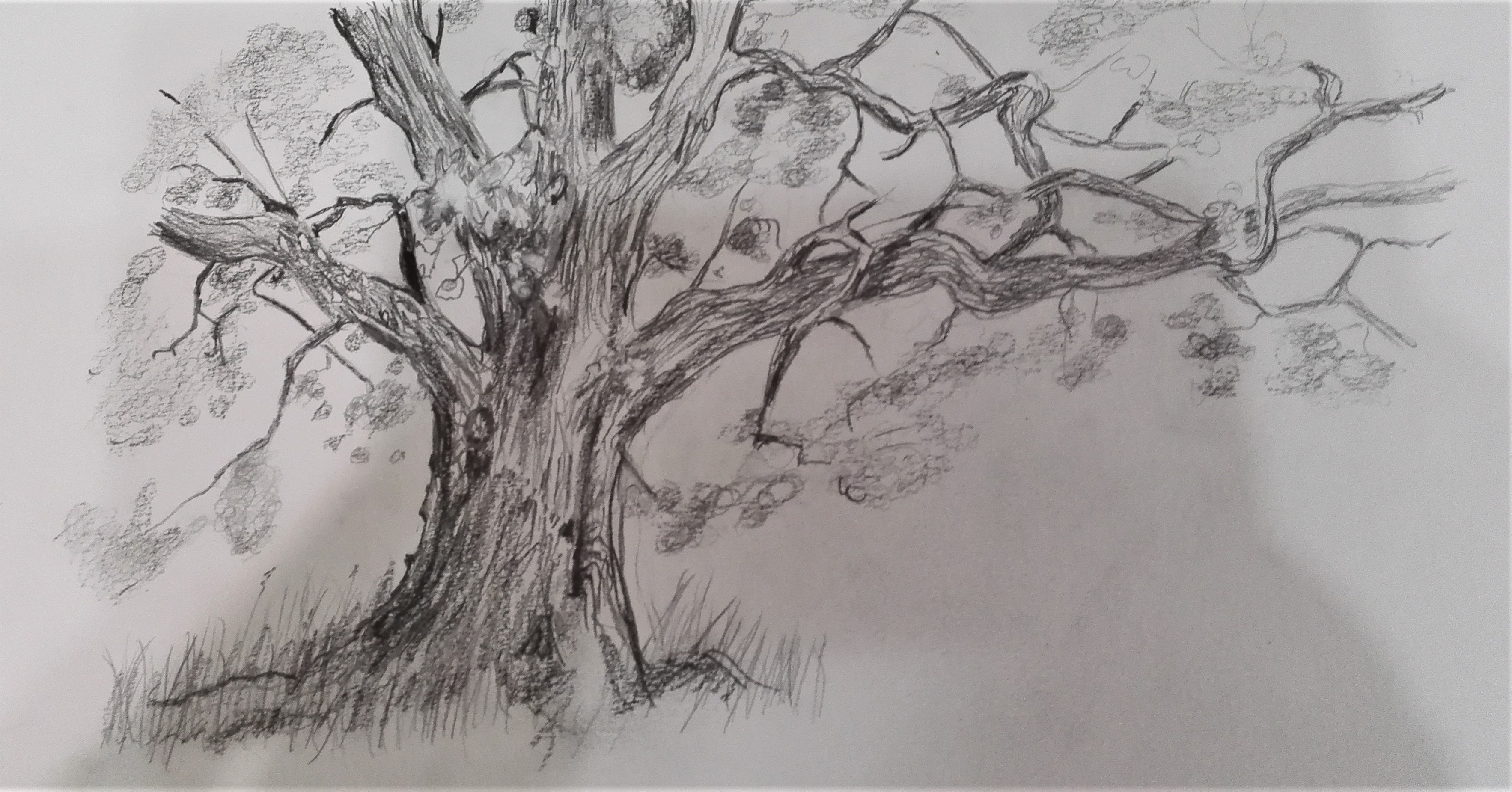 Learn how to draw trees at Raya's Art Classes for adults