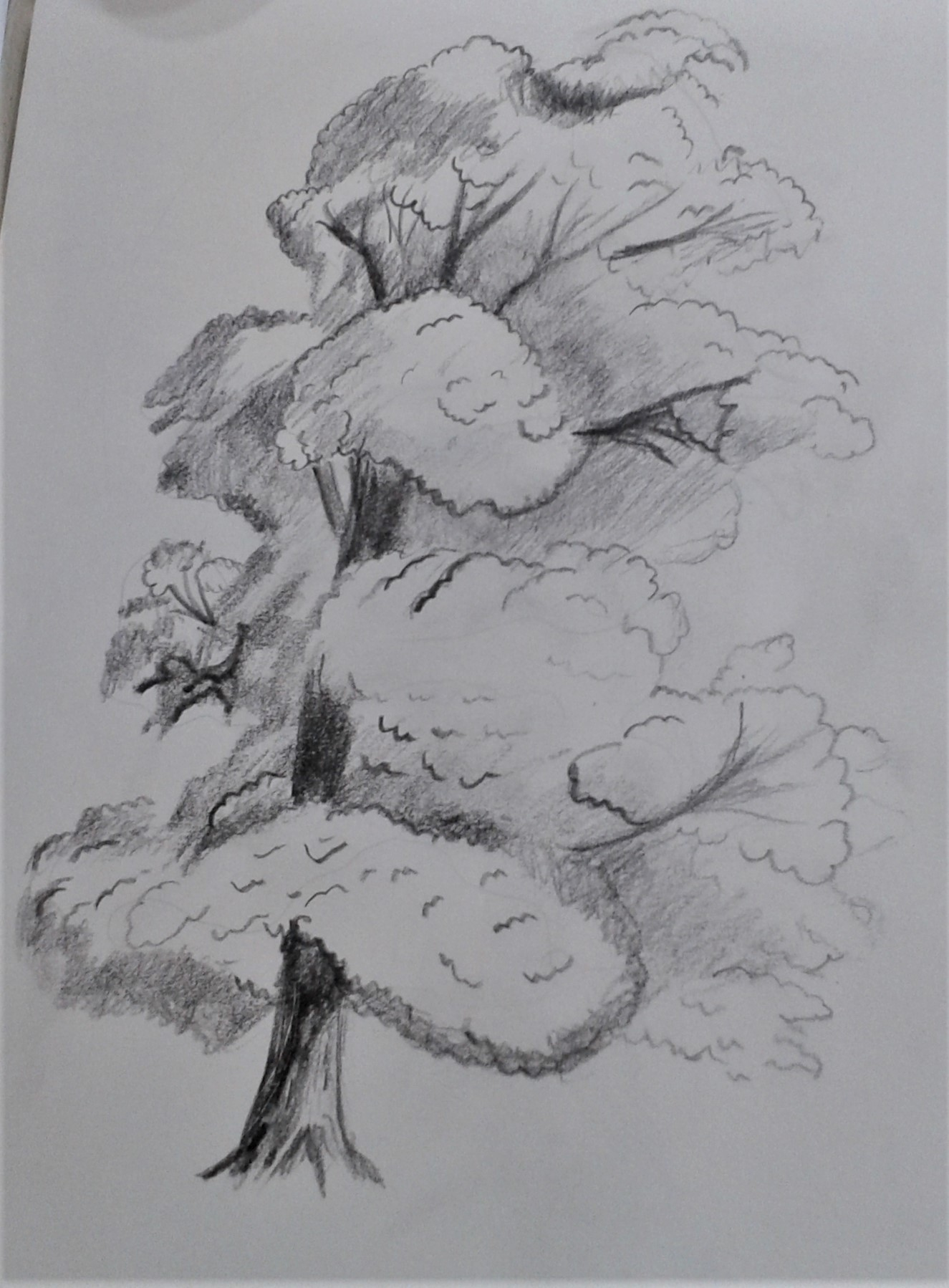Drawing of a tree created at Adult Art classes in Worcestershire