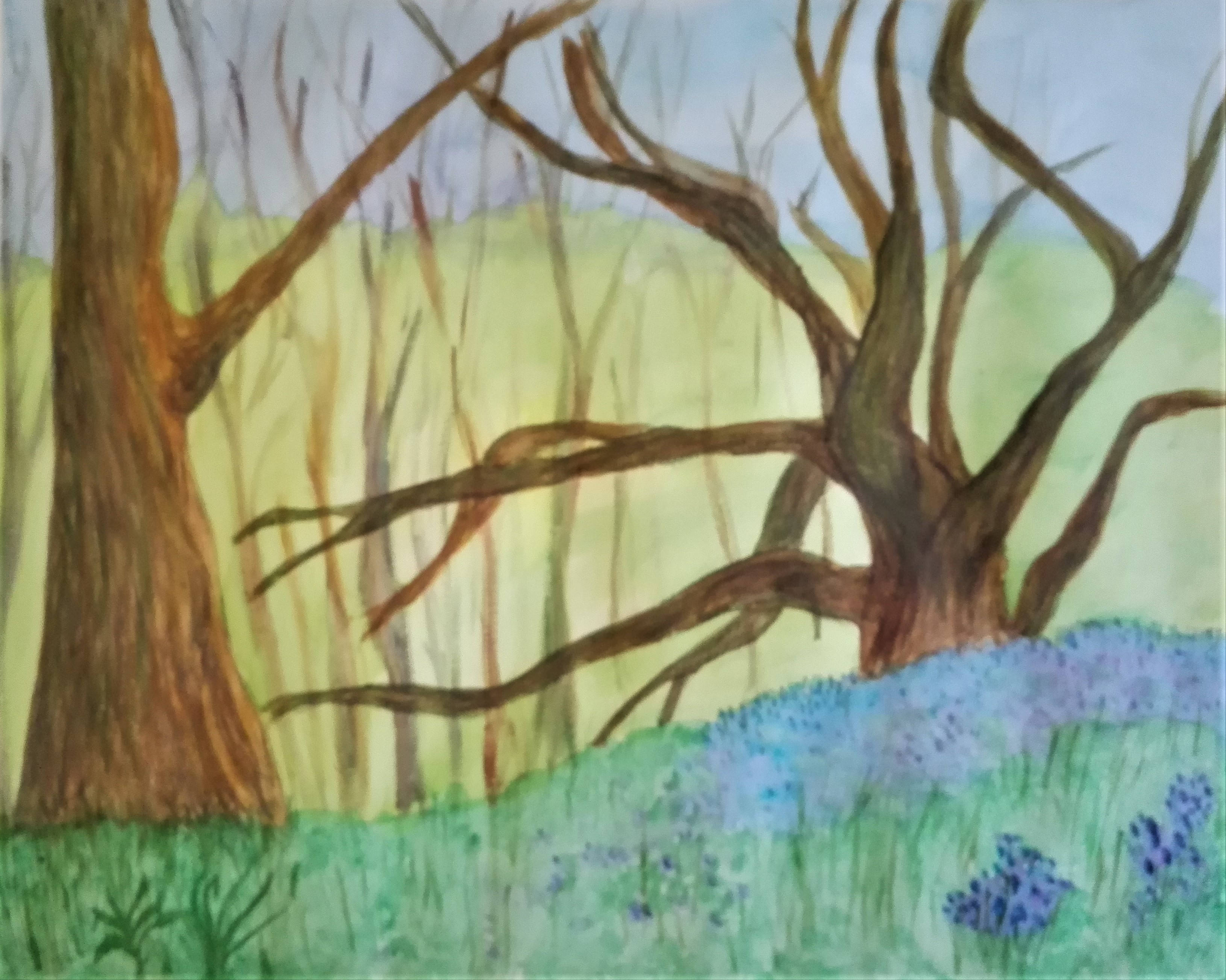 Bluebell woods watercolour created by a student at Magic Wool Art and Craft Studio in Kidderminster Worcestershire