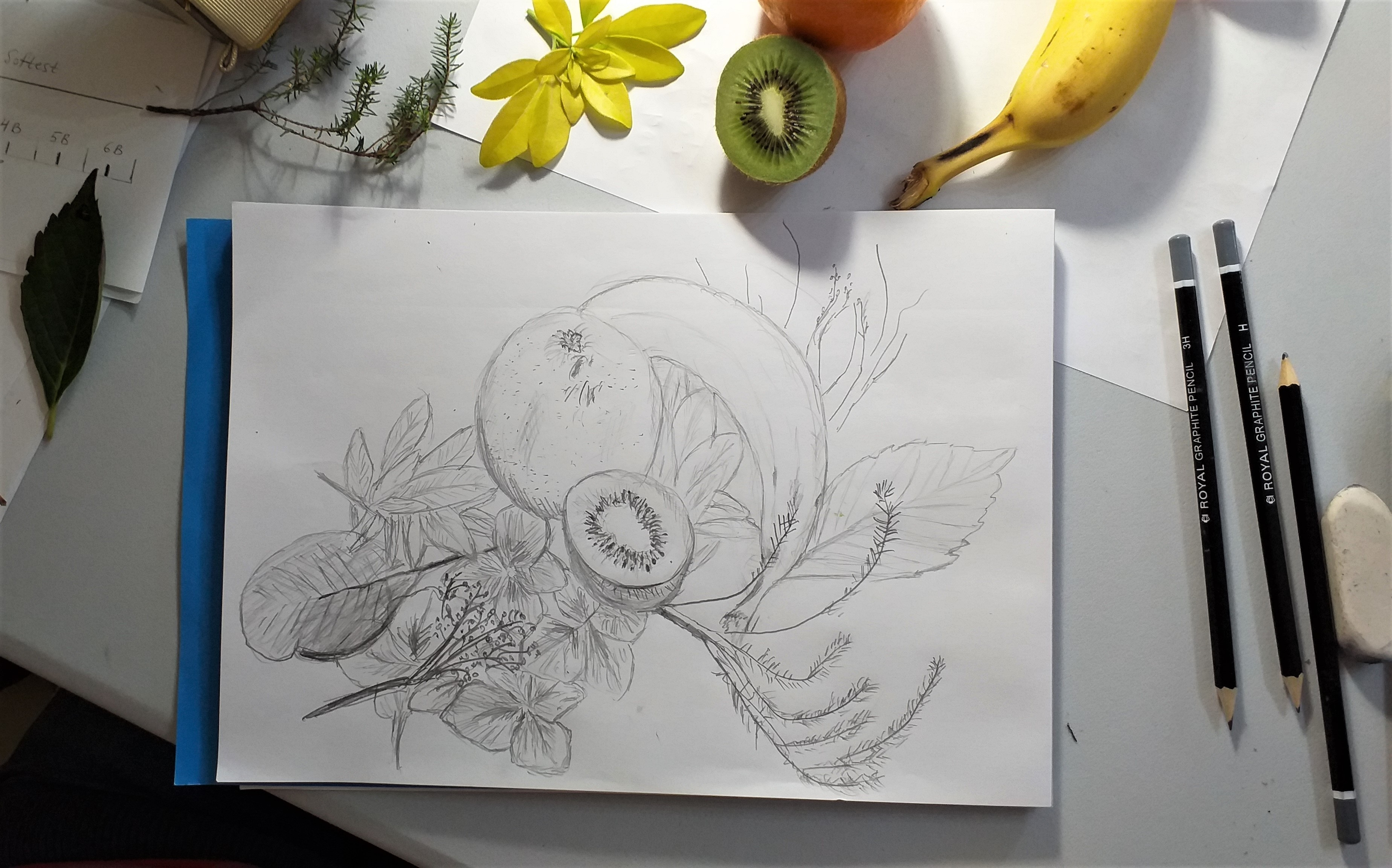 Jan's drawing of natural forms created at art classes for absolute beginners in Kidderminster Worcestershire