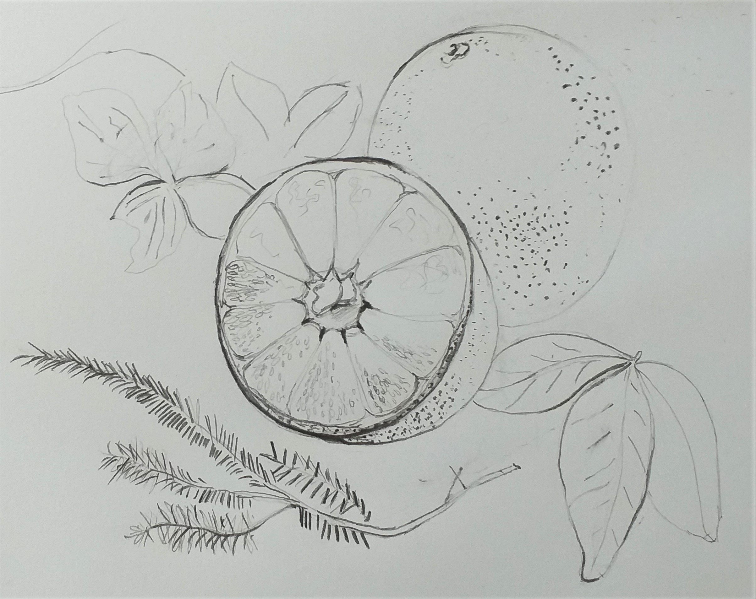 Linda's line drawing of fruit and leaves