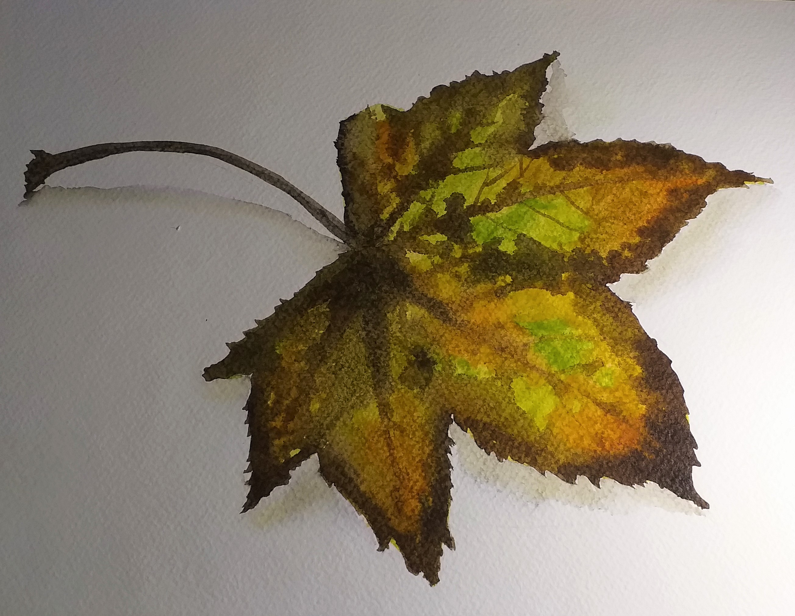 Painting Autumn leaves in watrercolour at art classes in Kidderminster West Midlands