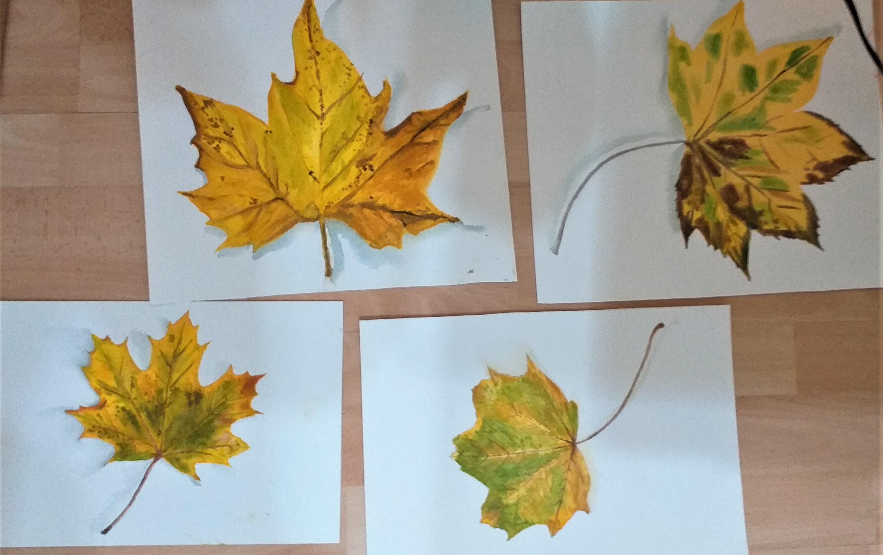 Students's watercolour paintings of Autumn leaves created at art classes with Raya Brown