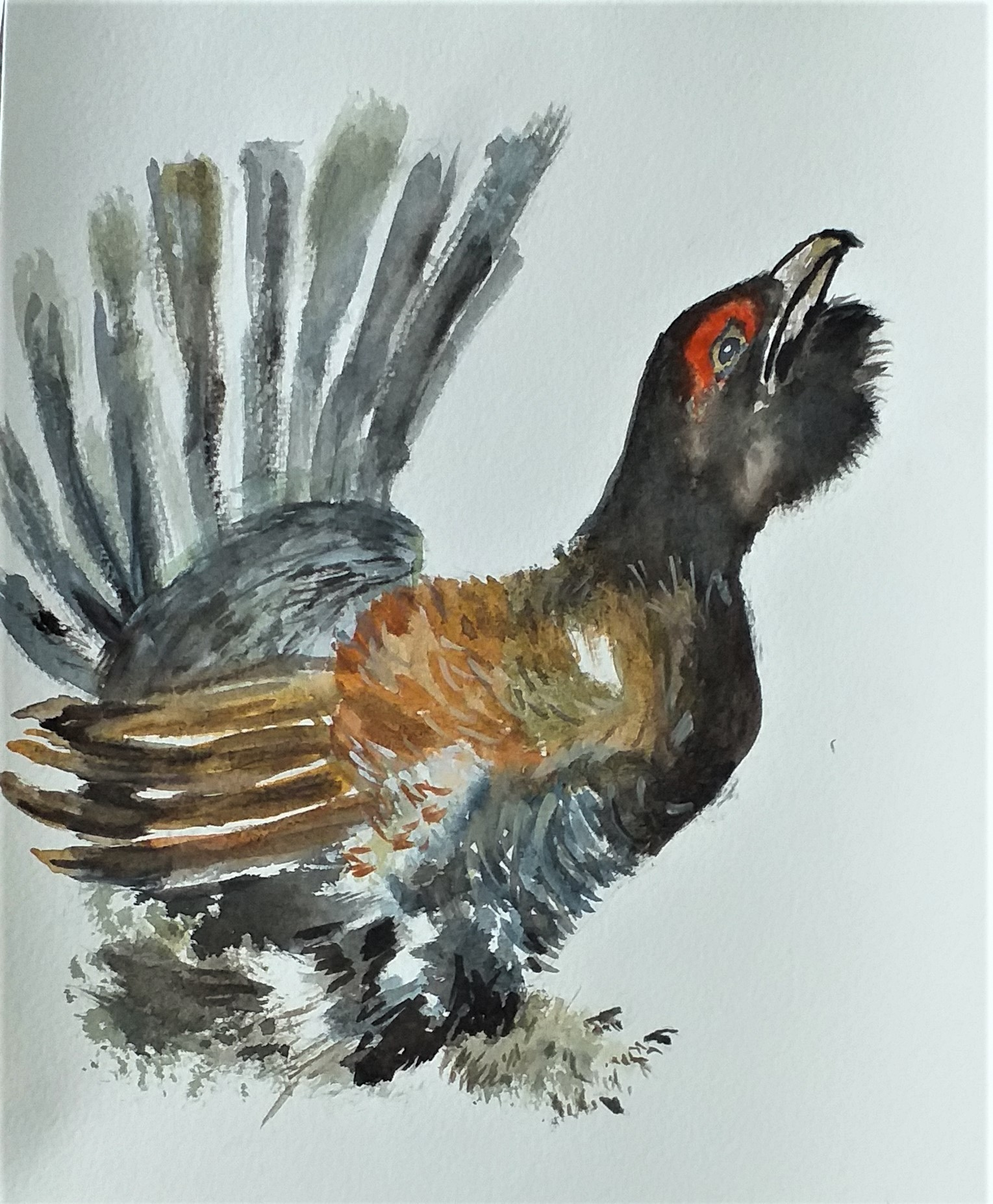 Learn to paint birds in watercolour with Raya Brown at Kiddermister Worcestershire.