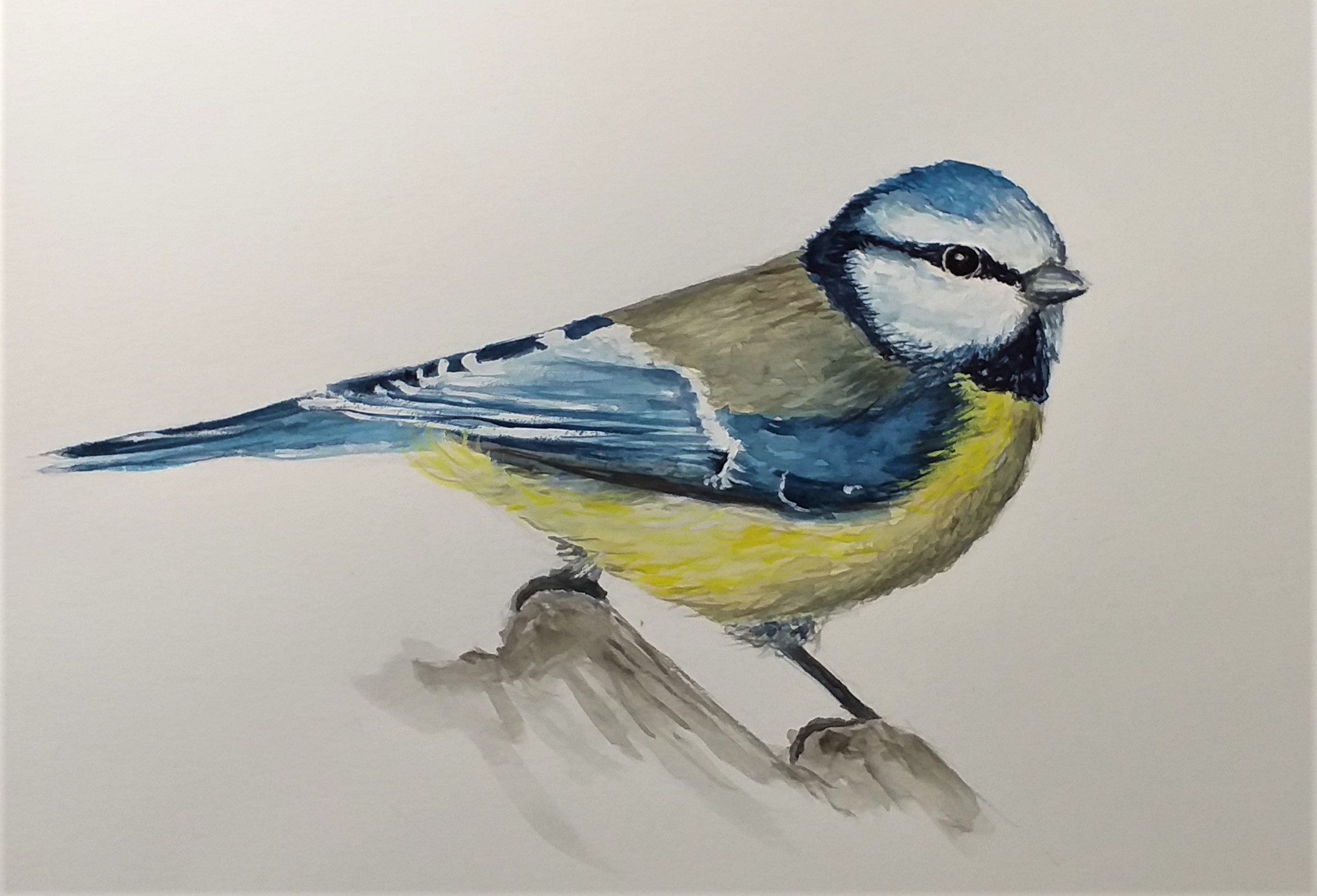 Painting-birds-in-watercolour-at-Kidderminster-Worcestershire-at-Rayas-Art-Classes