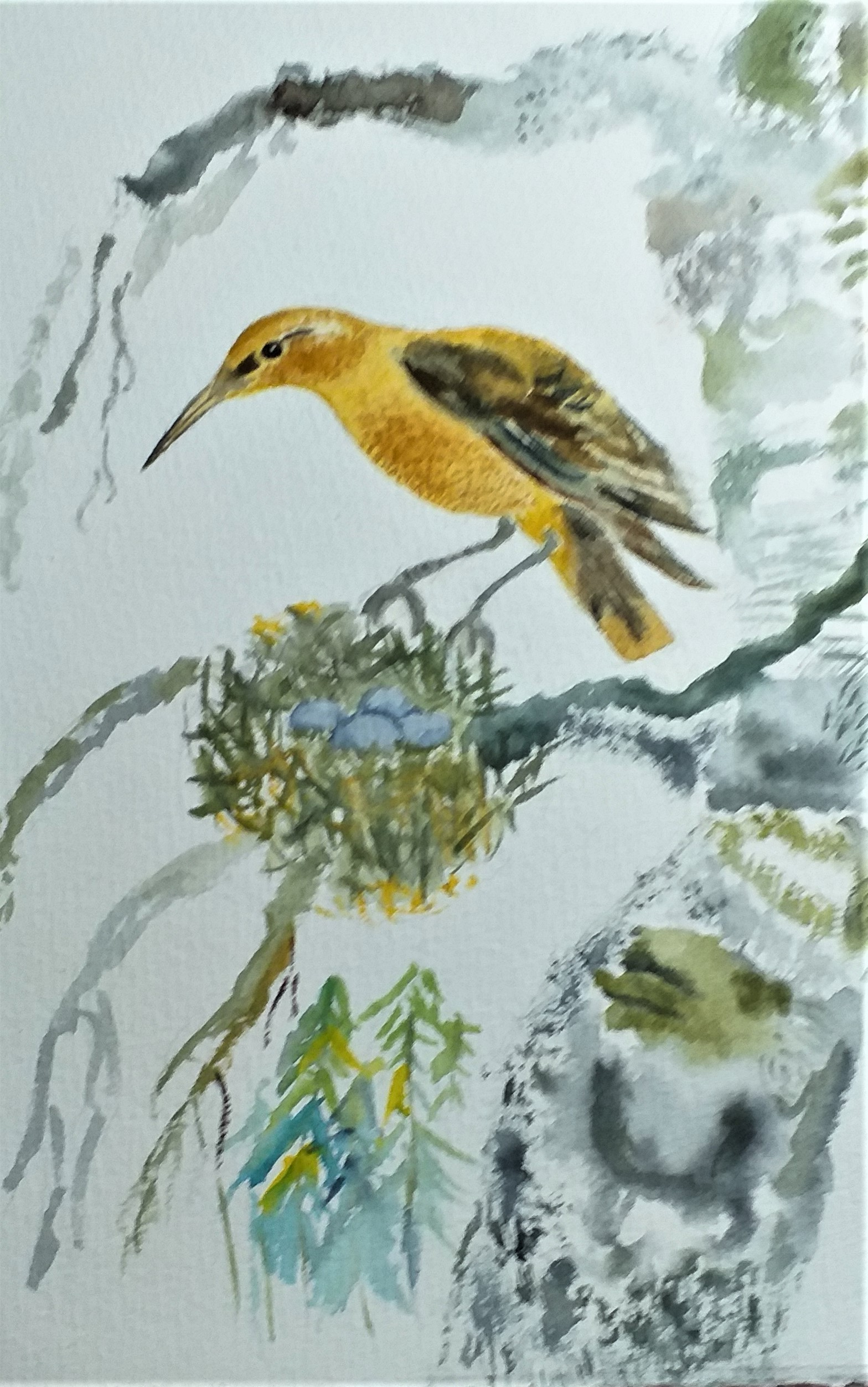 Watercolour painting of a bird. Students work at art classes in Kidderminster