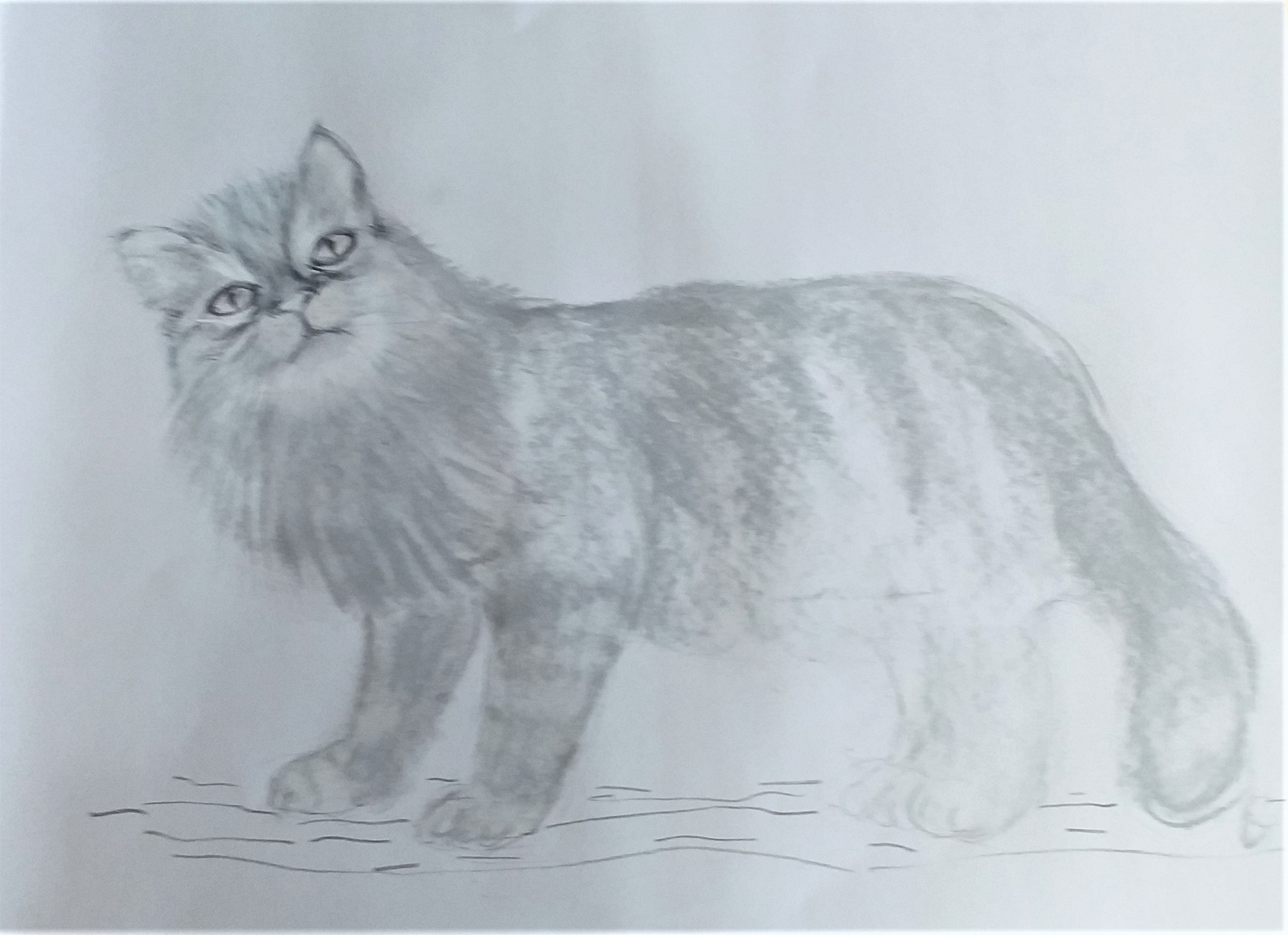 Linda's cat drawing . Pastels and coloured pencils.