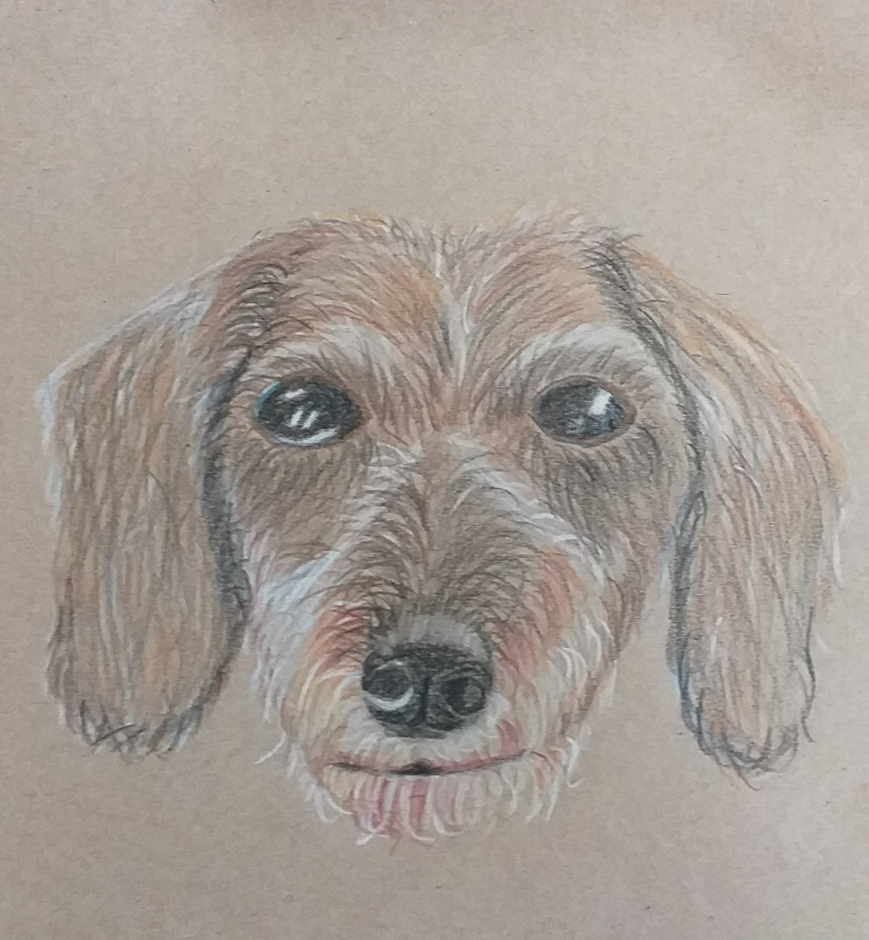 Pet drawing by Adelle created at Fundamental Art Skills course