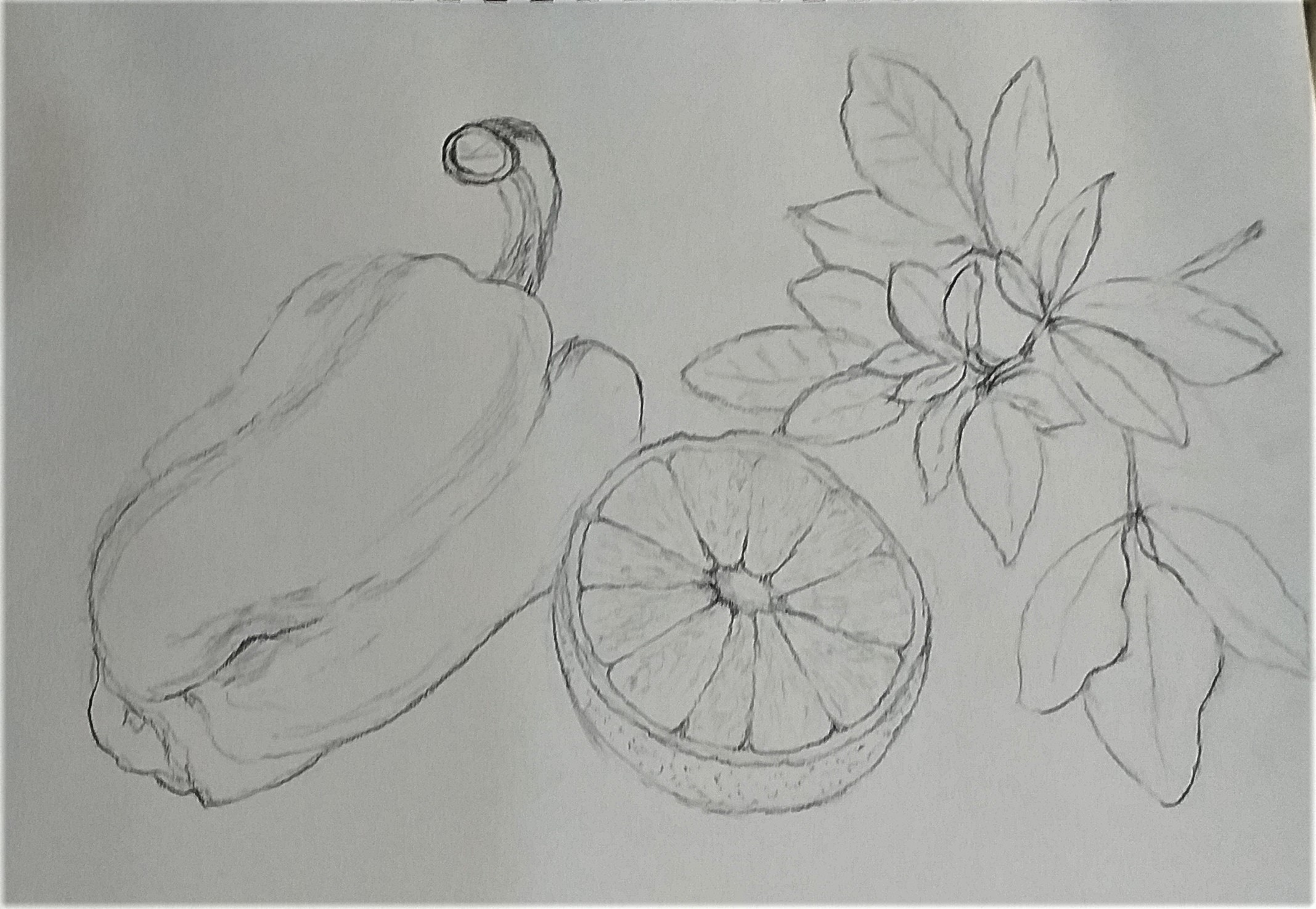 Karen's drawing of natural forms produced at Raya's Art course in Kidderminster