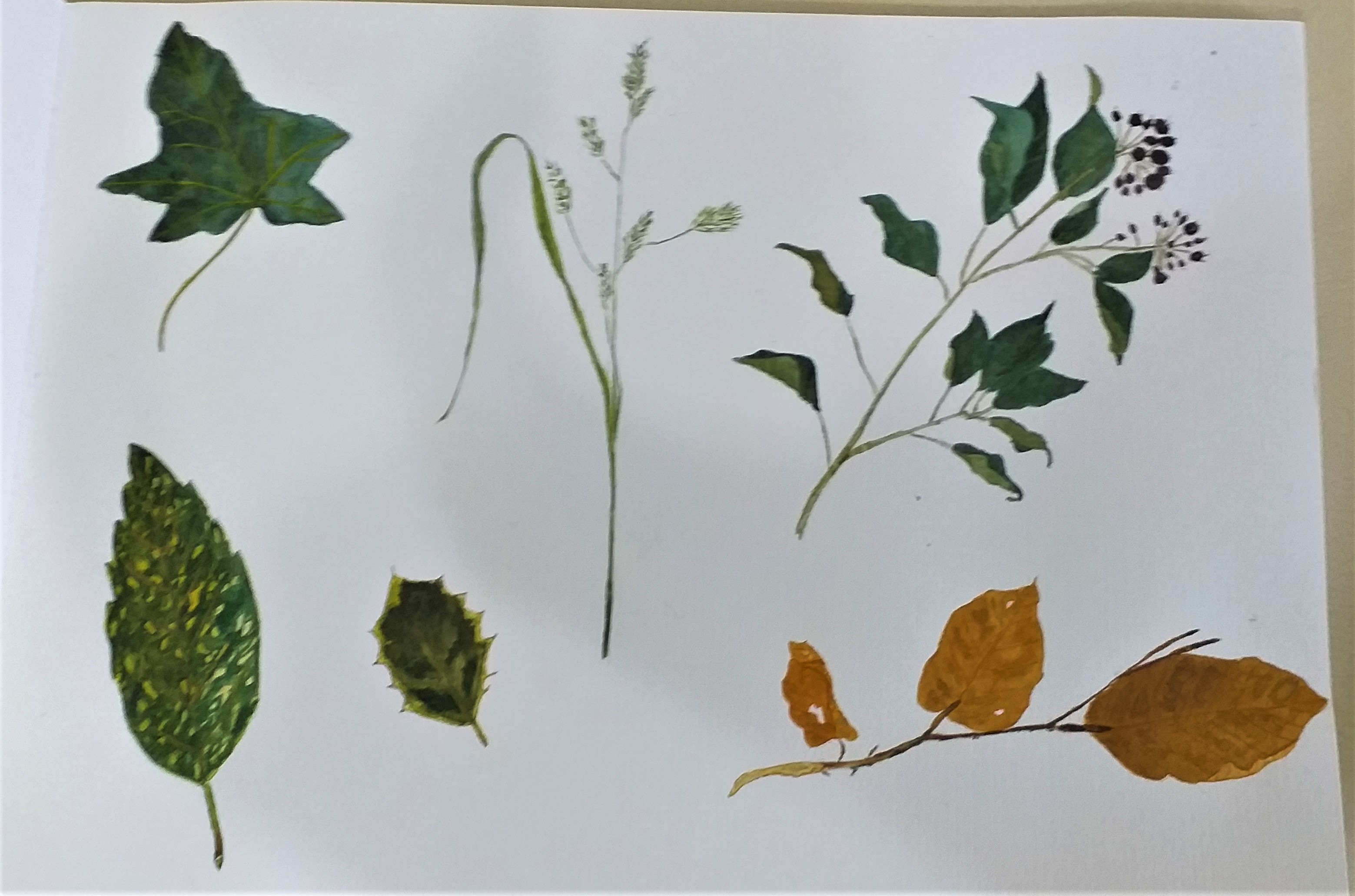 Lovely botanical drawings and painting created at Art classes in Worcestershire