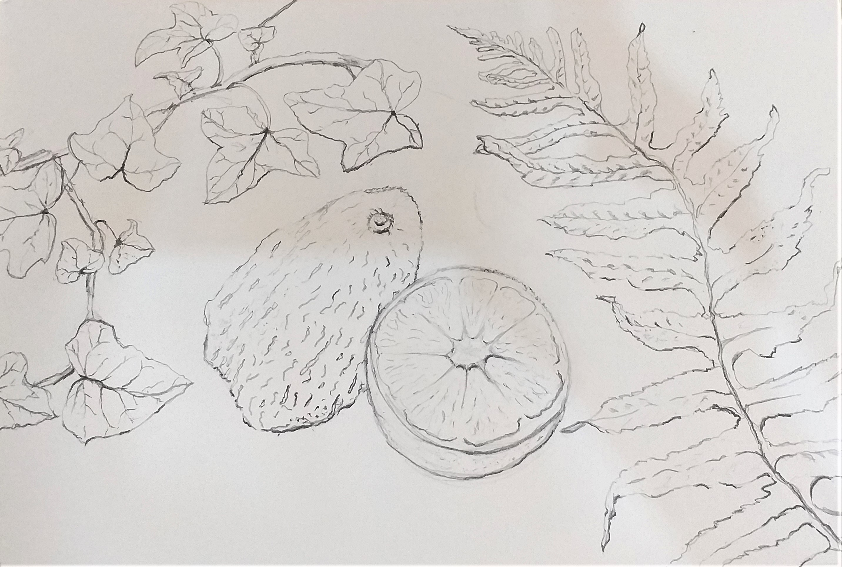 Beginners in Art learn how to draw natural forms using line at Art course in Kidderminster