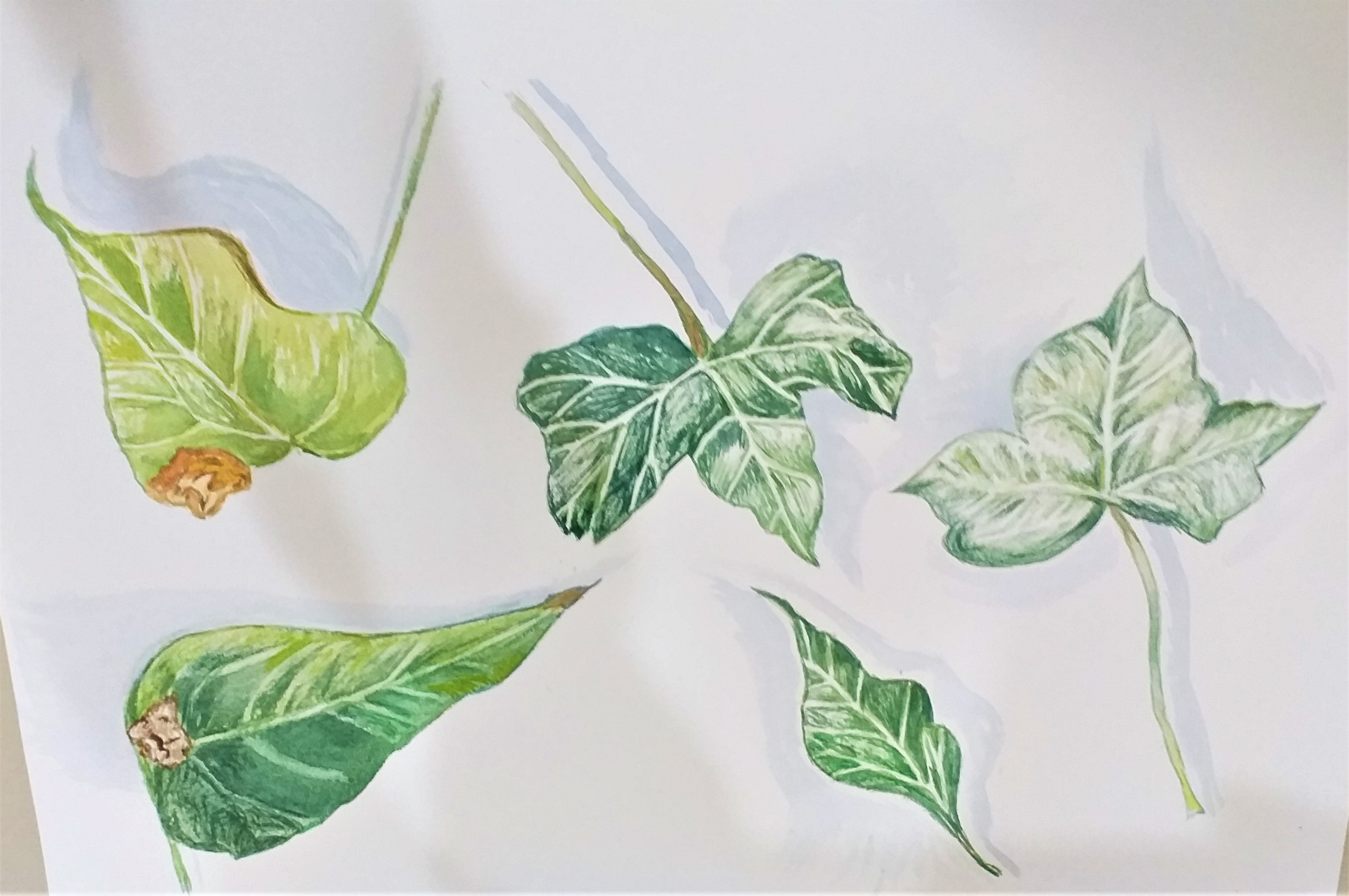Deb's watercolour study of leaves created at Magic Wool Art and Craft Studio in Kidderminster.