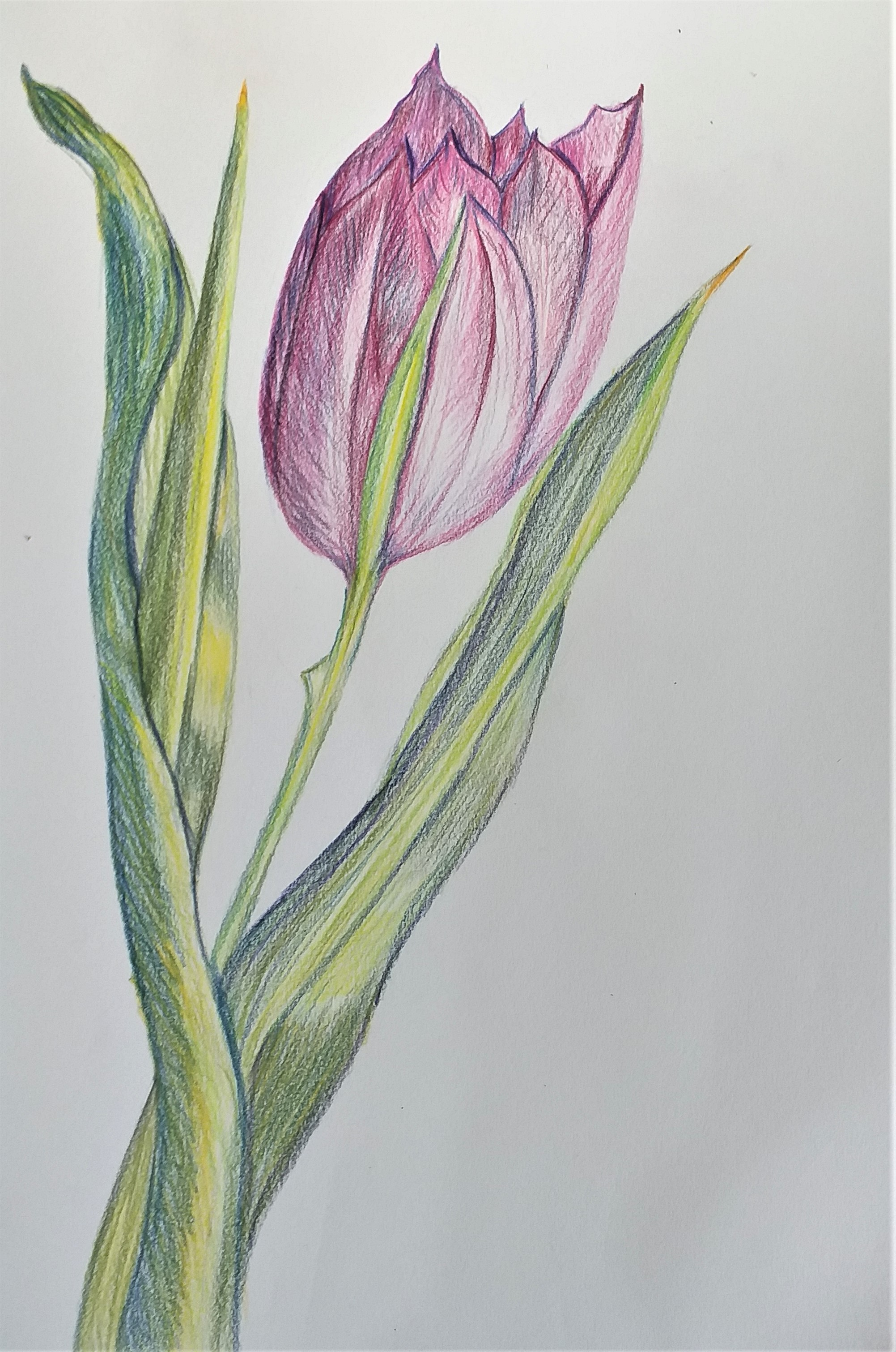Learn how to draw flowers with coloured pencils at Art Classes in Worcestershire