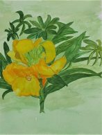 Watercolour studies of plants produced by complete beginners at Magic Wool Art and Craft Studio