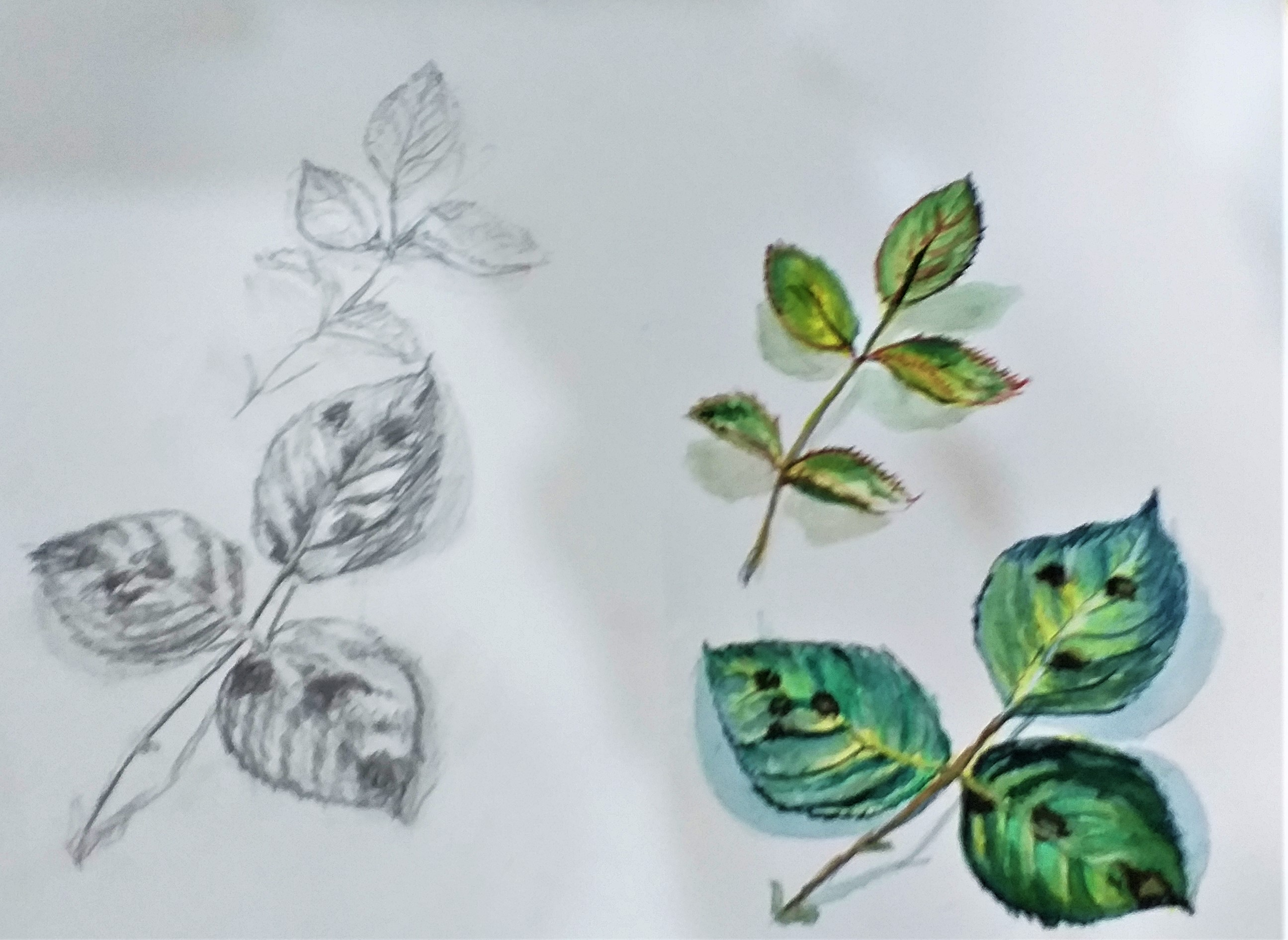 Watercolour and pencil studies of leaves created by a student at Raya's Art Classes in West Midlands