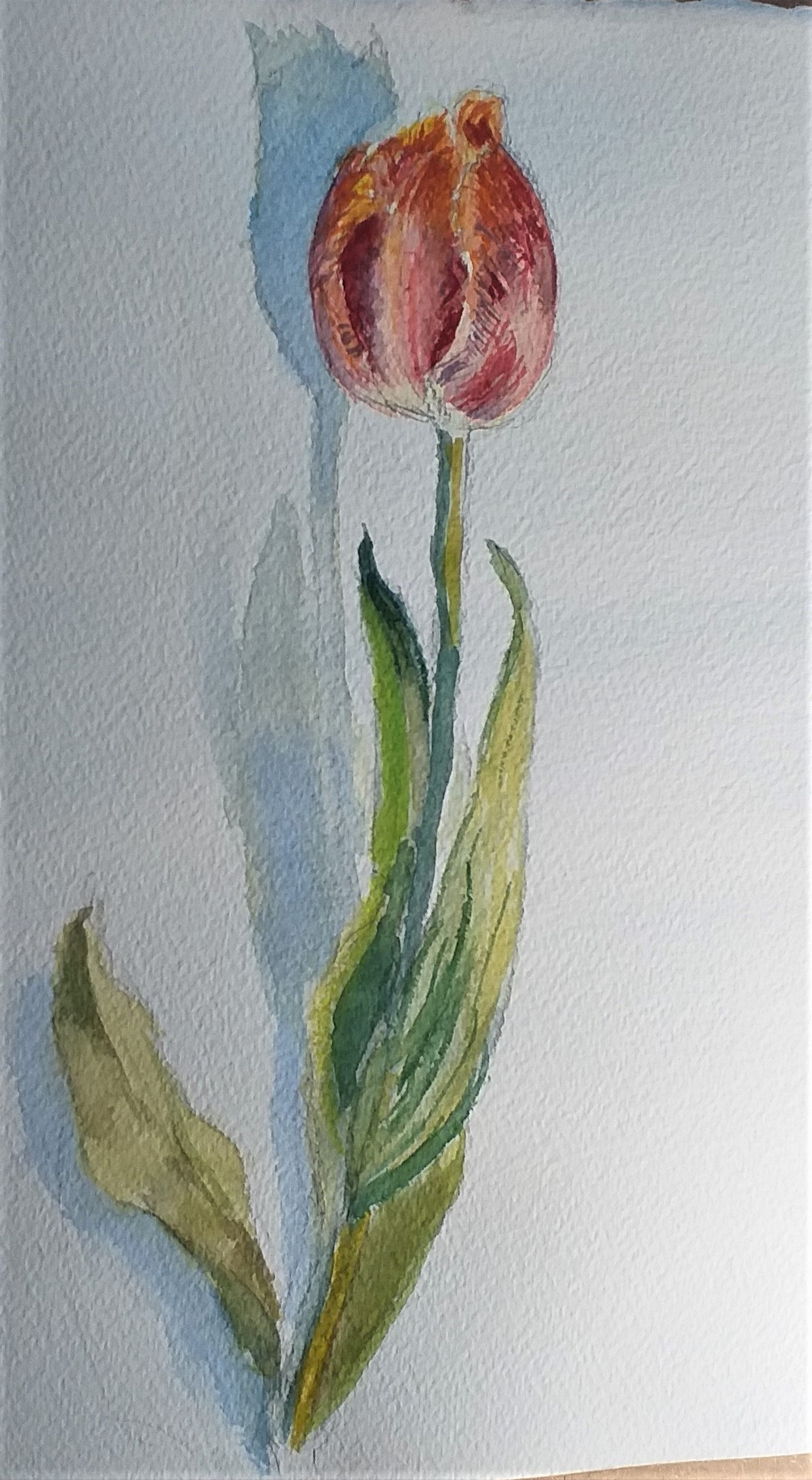 Working from direct observation at Art Watercolour classes in Kidderminster Worcestershire