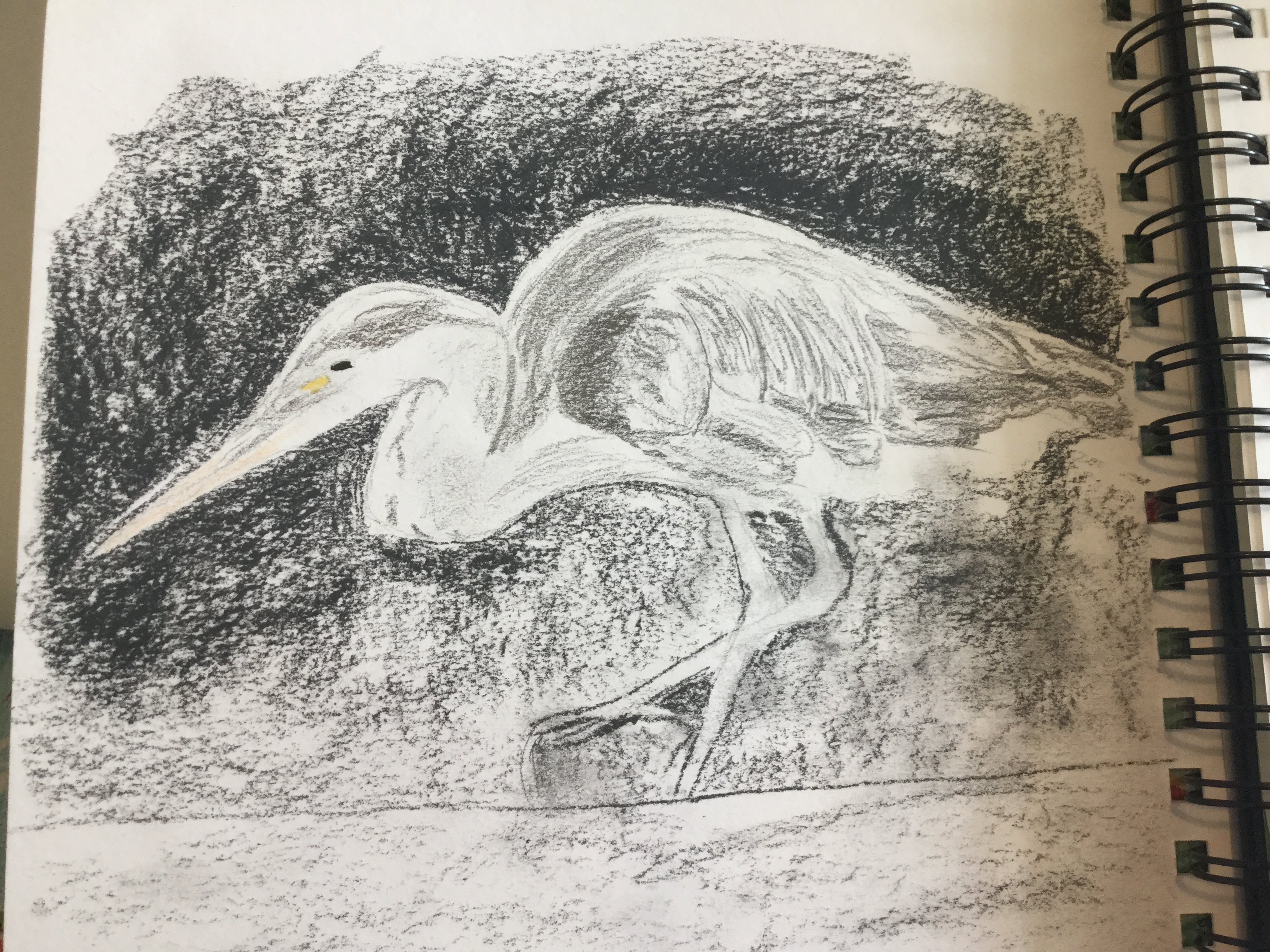 Charcoal drawing of heron by Christine