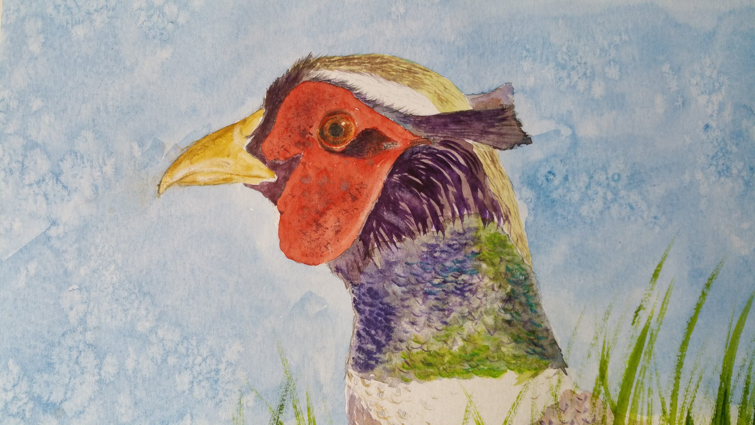 John's watercolour painting of a pheasant