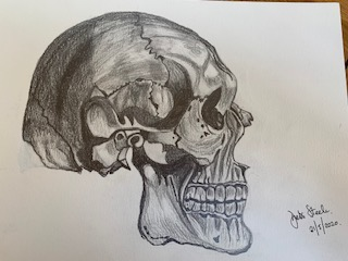 Charcoal drawing of a skull by a student