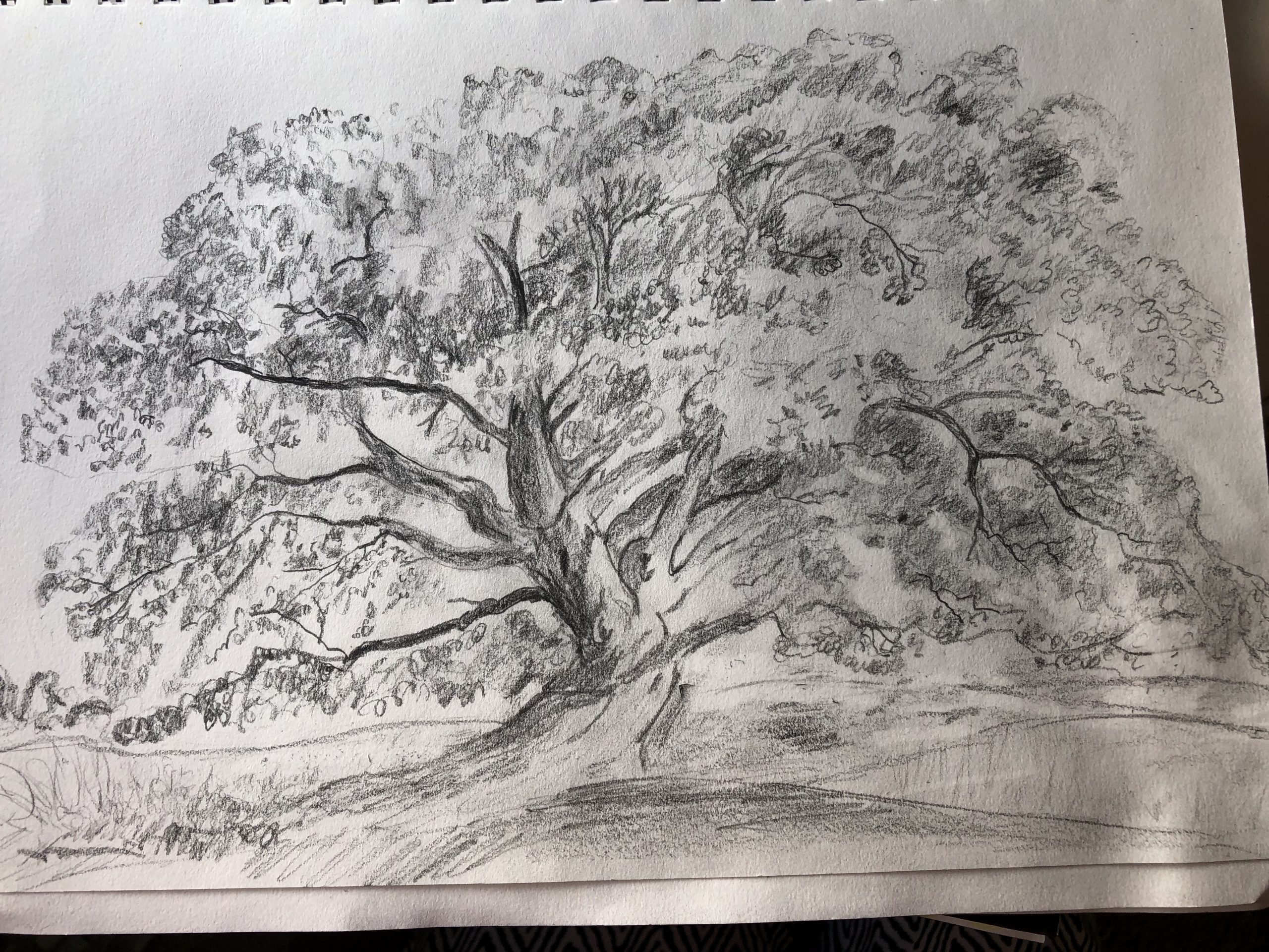 Drawing of a tree by Christine.