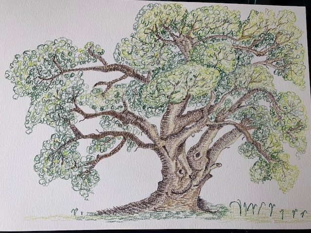 Drawing of a tree by Debs.