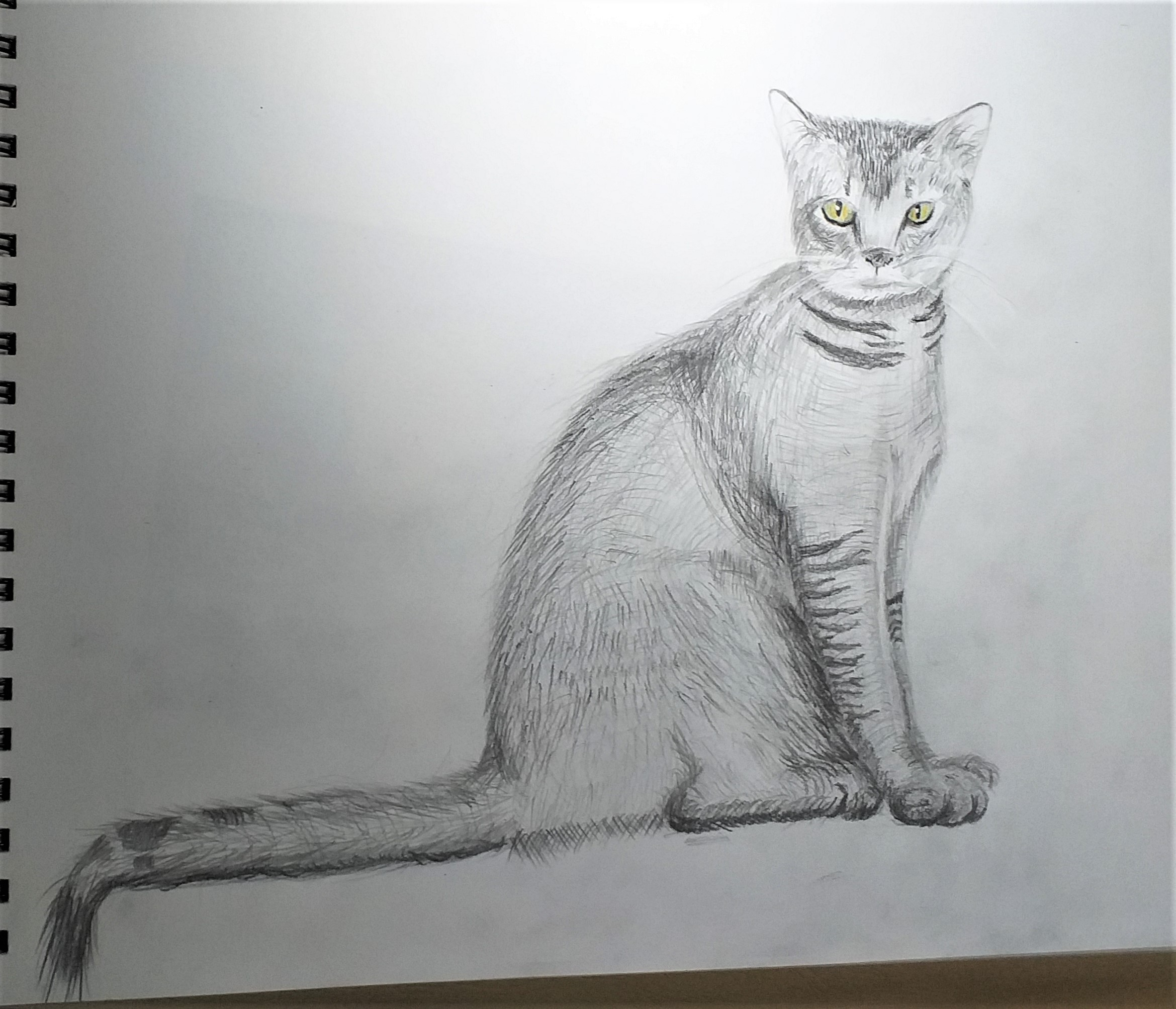 Drawing of a cat by Luke