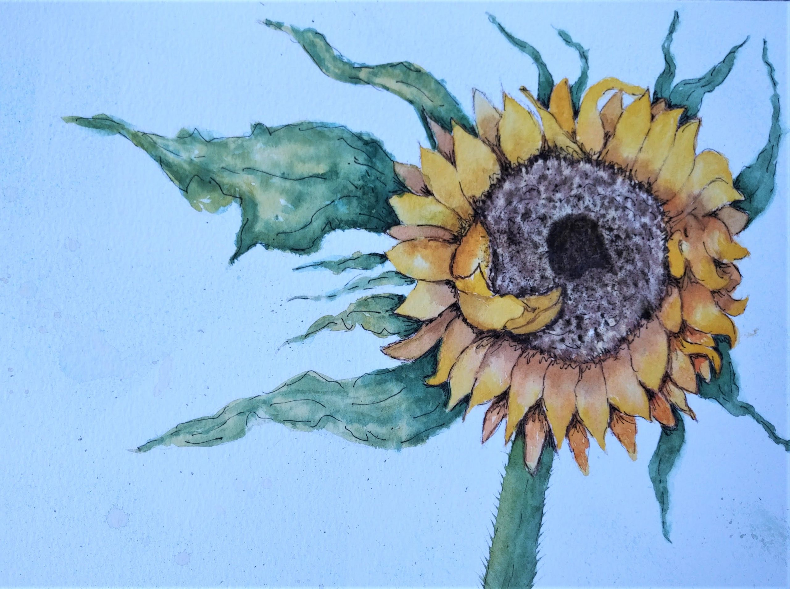 Beautiful watercolours of sunflowers painted at online watercolour art  classes via zoom with artist Raya Brown