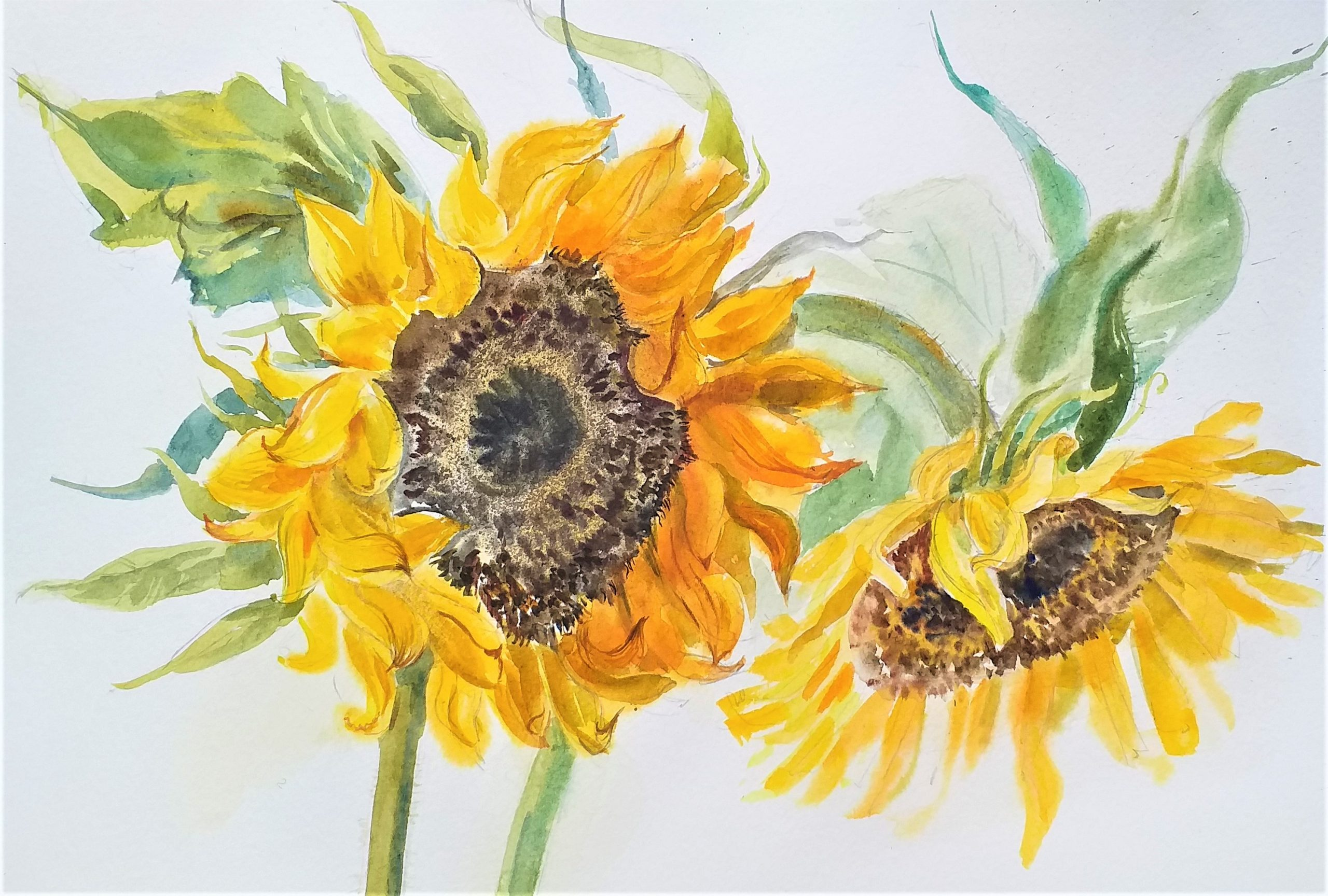 learn to paint sunflowers in watercolour with artist Raya Brown