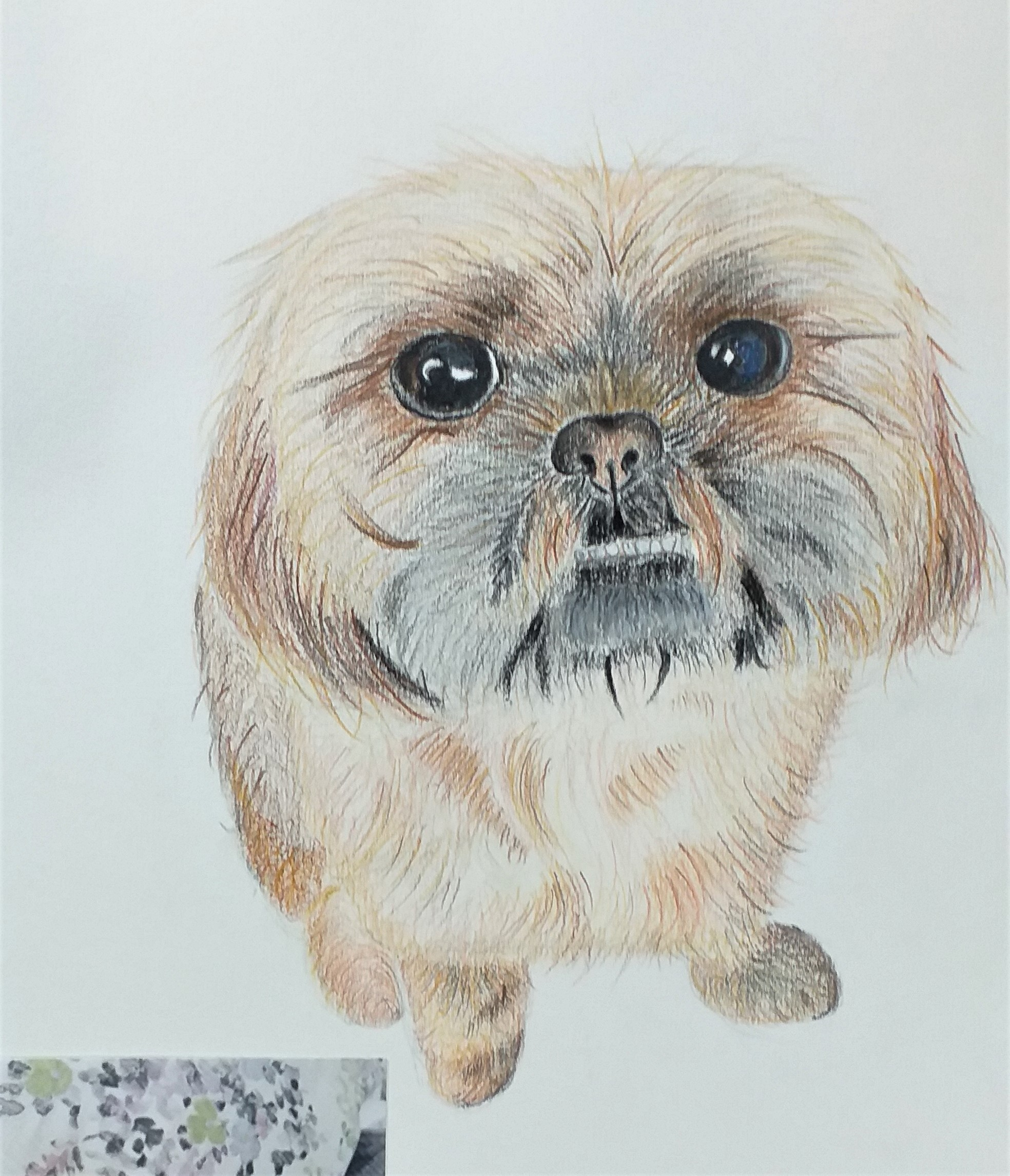 Learn to draw animal portraits at art classes for beginners in Worcestershire