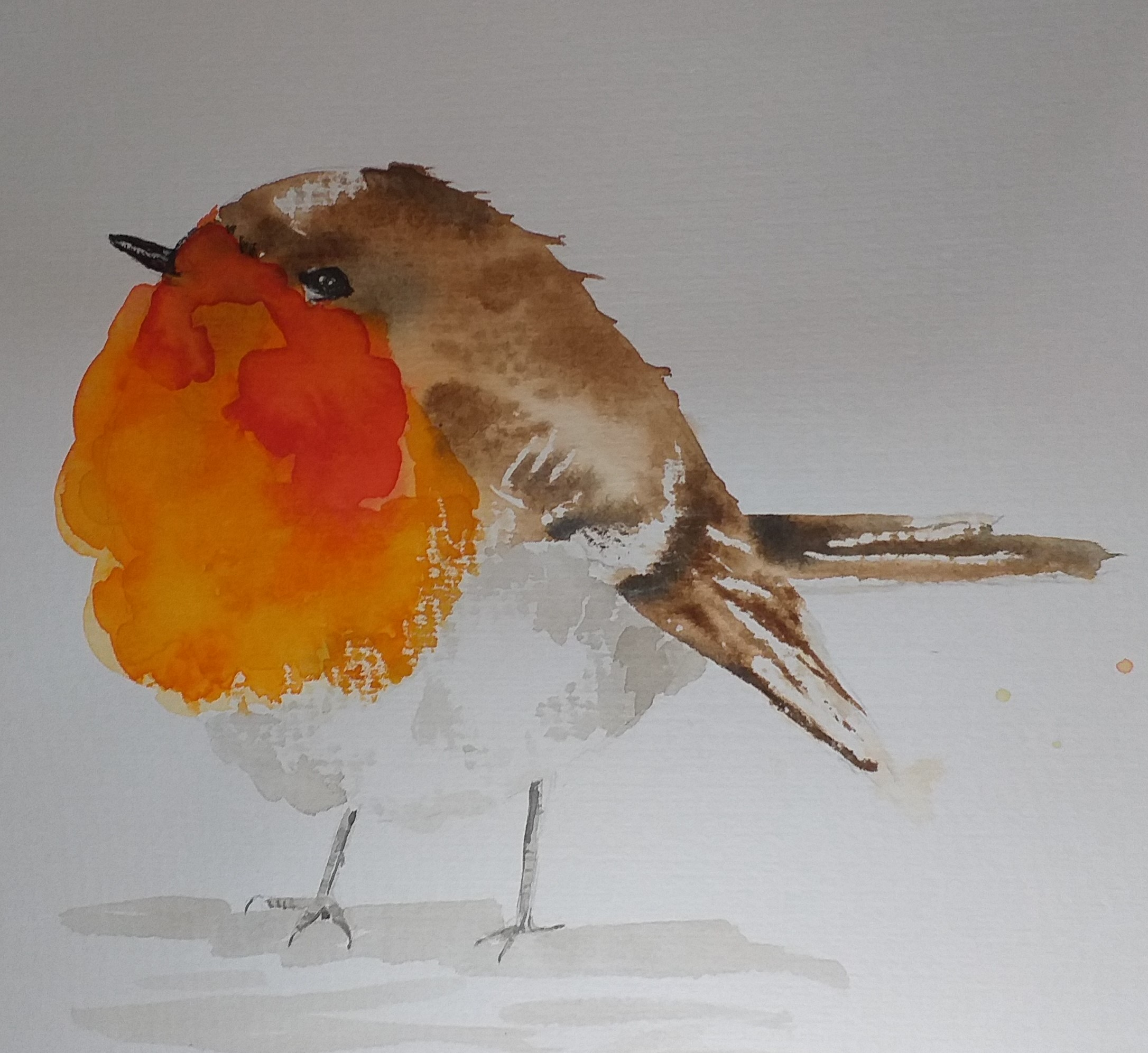 Red Robin watercolour painting by Marion