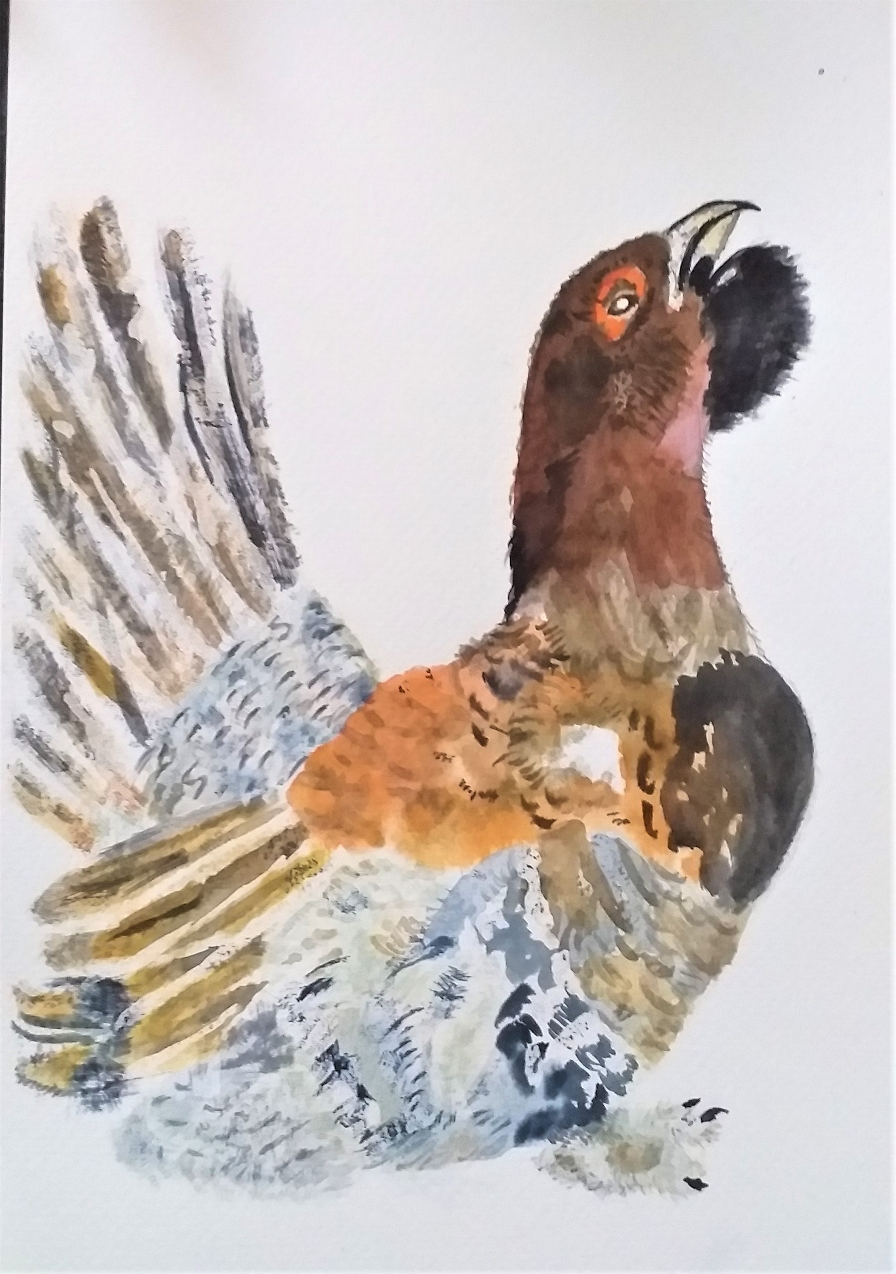 Paint birds in Watercolour in Worcestershire