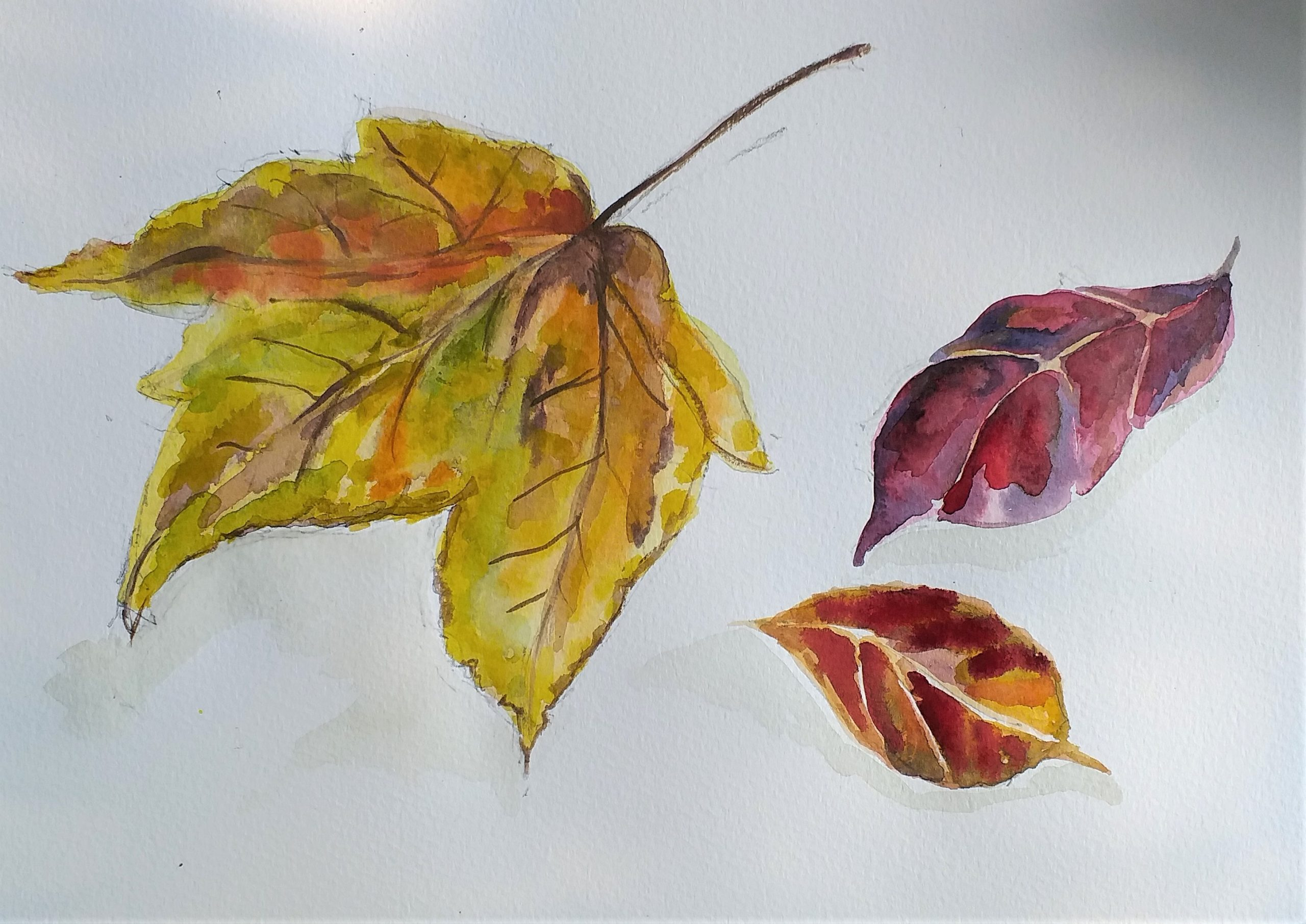 Autumn leaves watercolour by Linda.