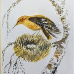 Learn to draw and paint birds at Magic Wool Art and Craft Studio in Kidderminster, Worcestershire
