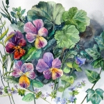 'Pansies' original watercolour by Raya Brown  62x63cm  £150