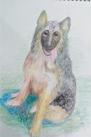 Lovely pet drawings created at Fundamental Art Skills course for beginners in Worcestershire