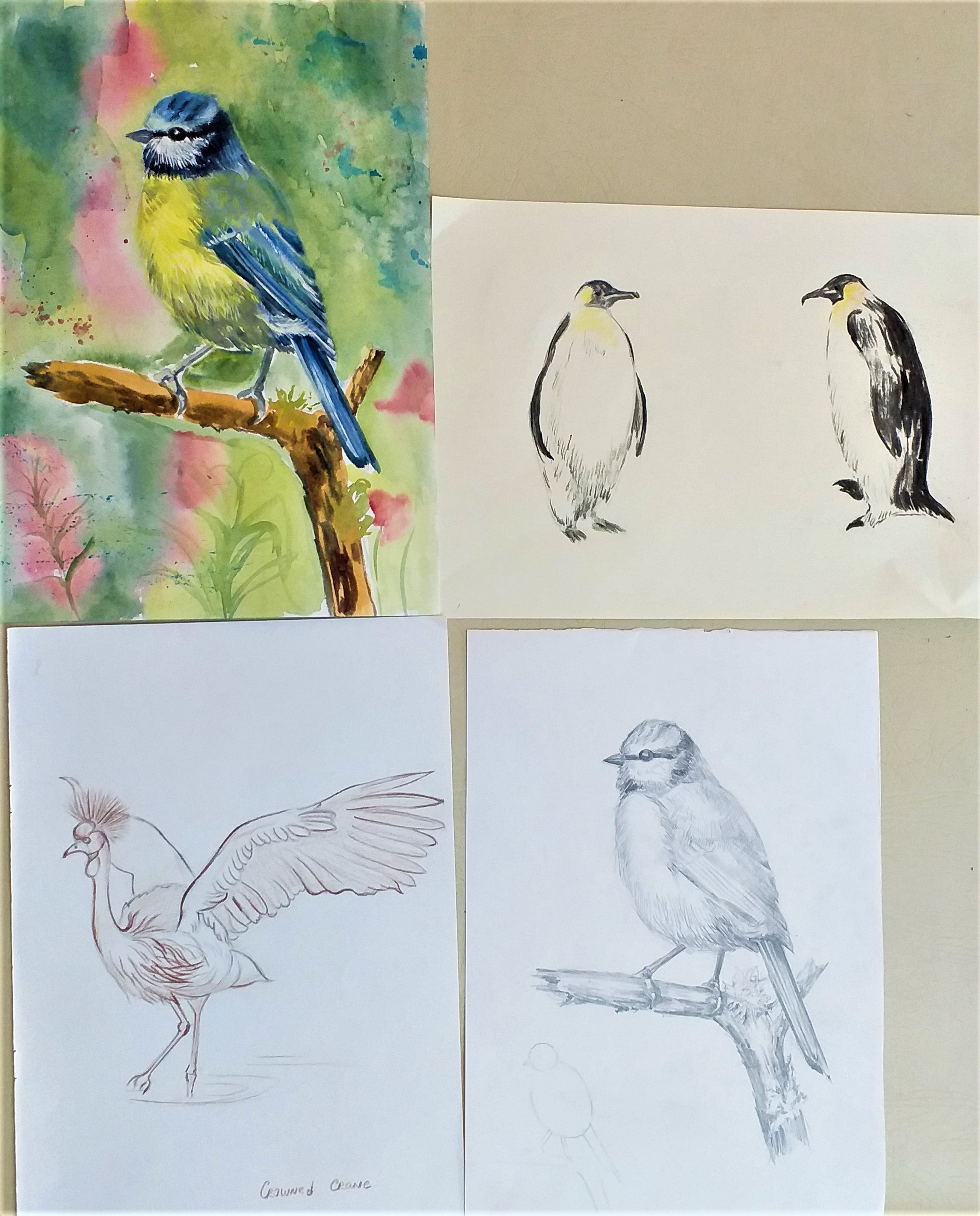 Drawings of birds using different materials. Birds and Natural Form course.