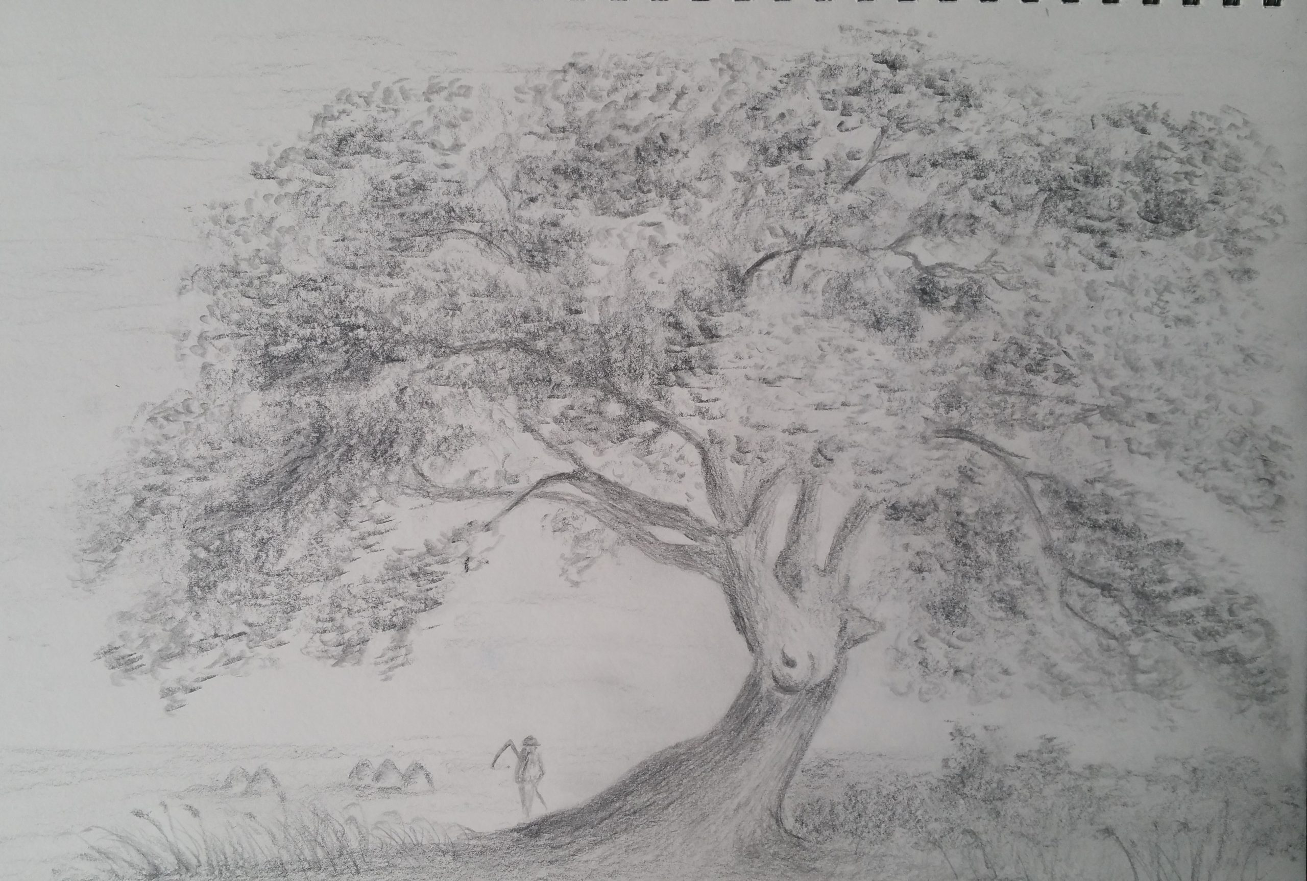 Drawing of a tree by John