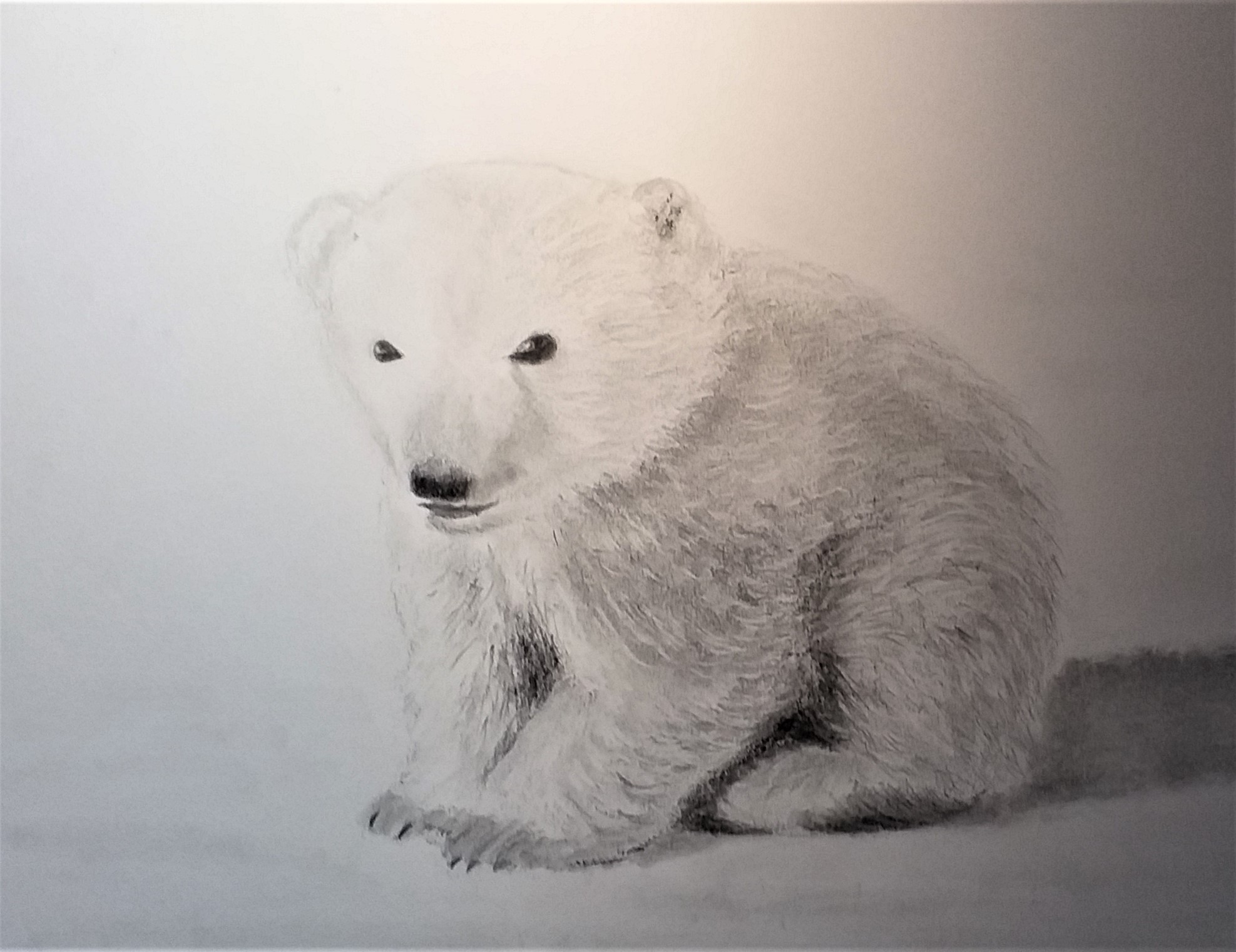 Learn how to draw animals at online art zoom course