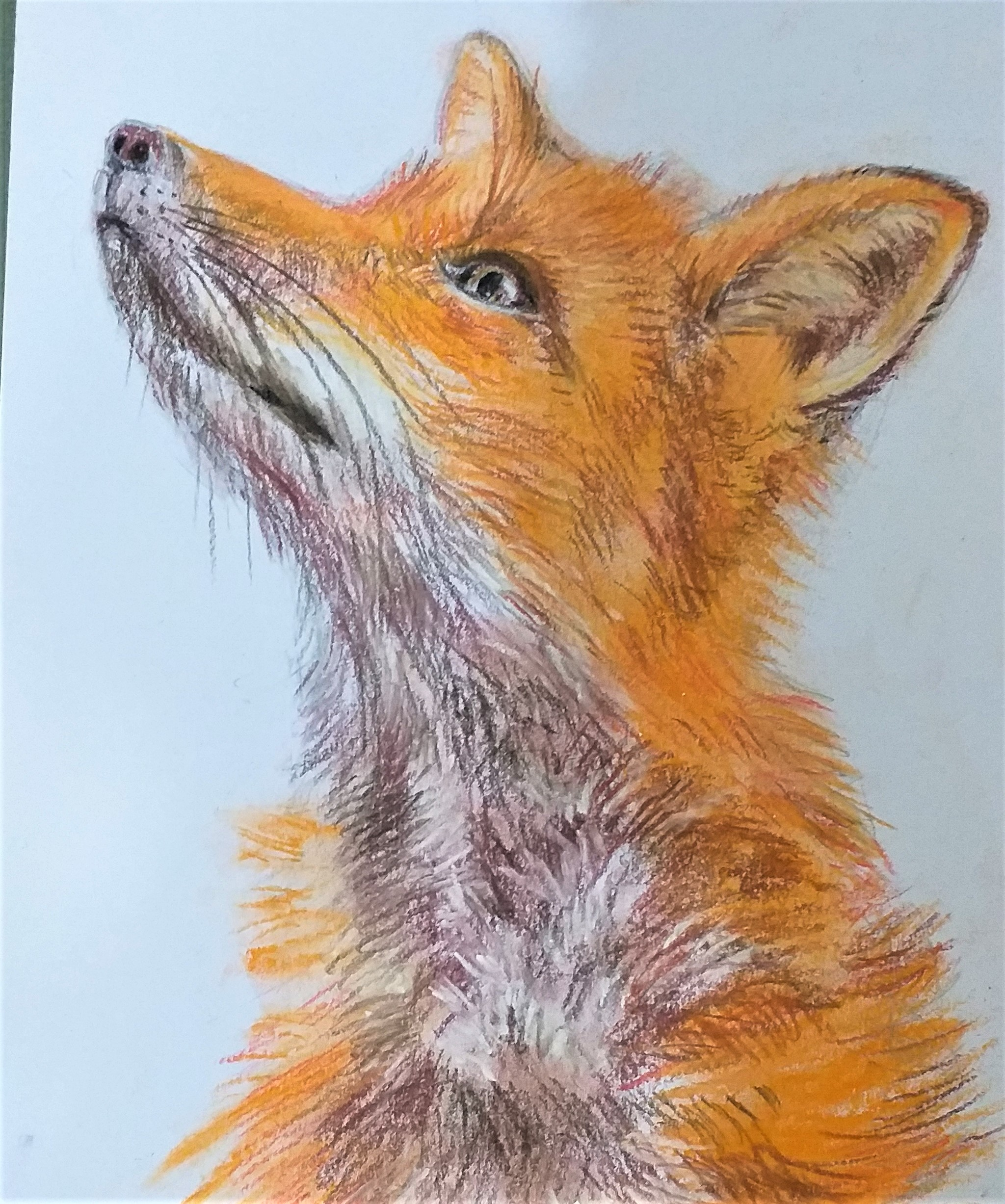 Learn to draw animals with pastels at online zoom art course