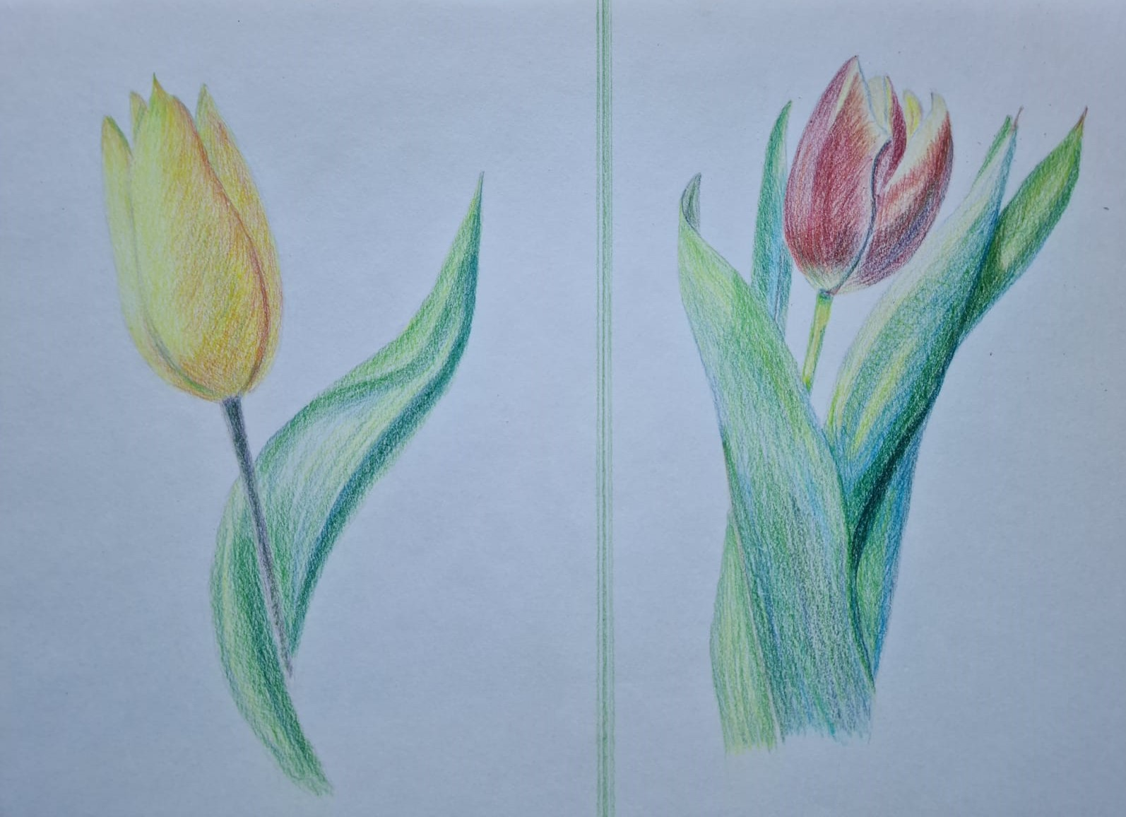 Floral studies by Sally created at online art course with Worcestershire Artist Raya Brown