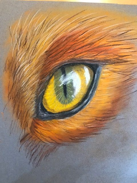 Fox's eye drawing by a student at online art classes