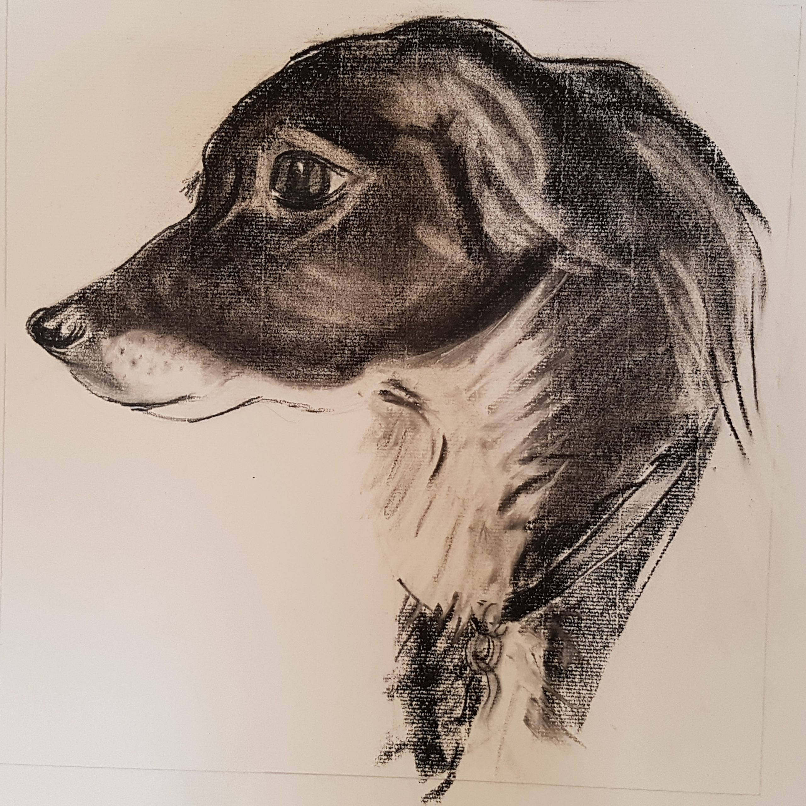 Pastel and charcoal drawing of a Collie by Sara