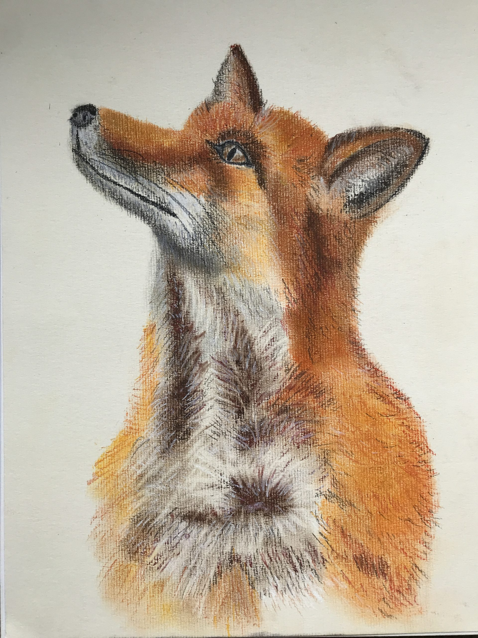 Pastel Painting of a fox by Karen created at online art classes with artist Raya Brown