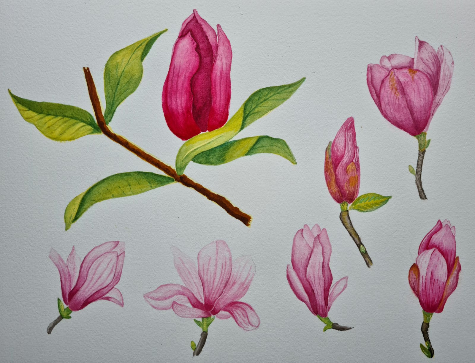Incredible watercolour paintings created by  beginners during their online art classes with artist Raya Brown.