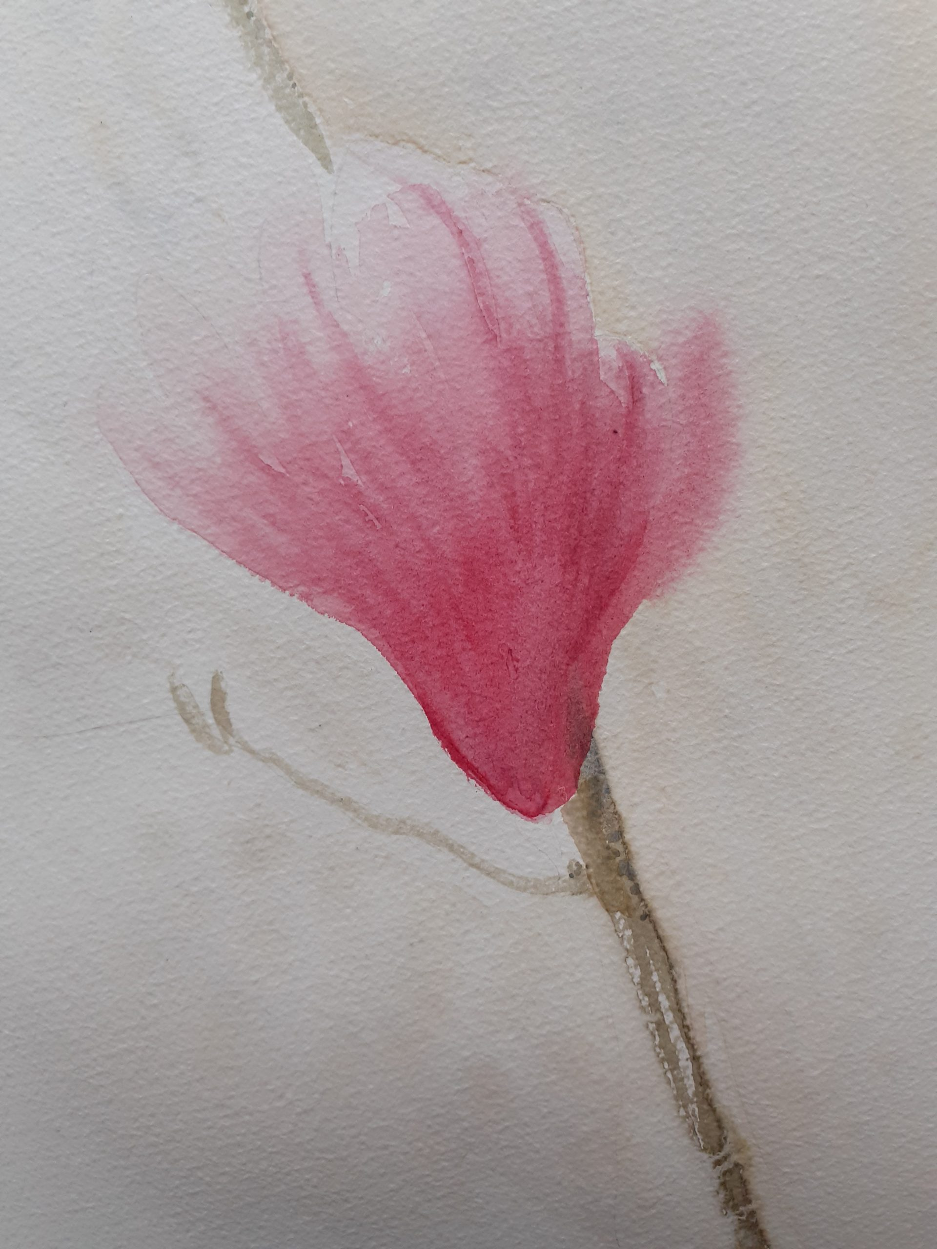 Magnolia watercolour painting by Alison