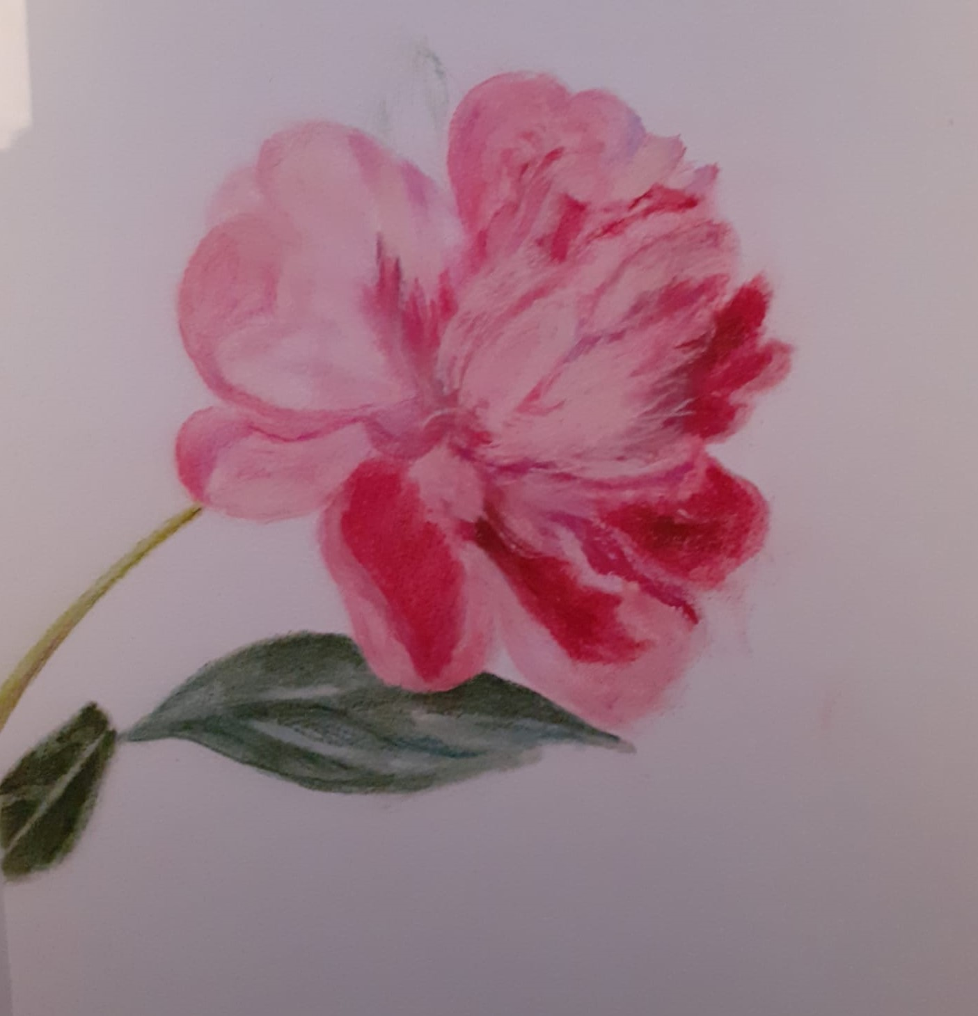 Peony by Linda. Introduction to soft pastels art zoom course